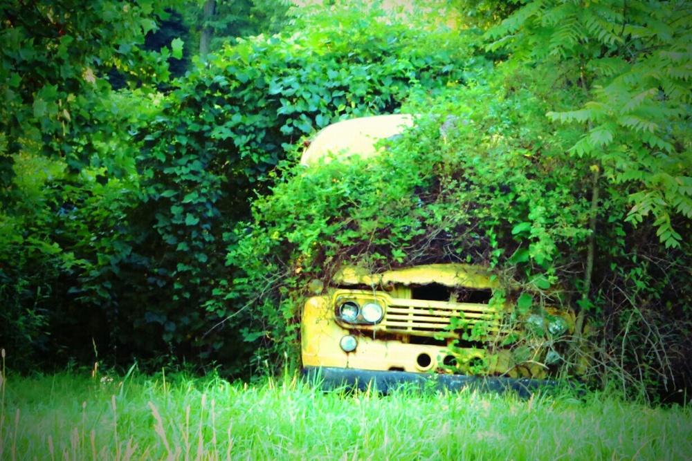 brush covered bus