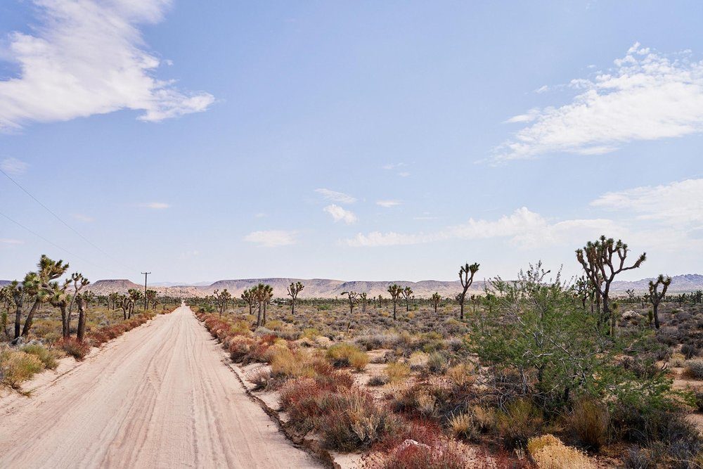 JoshuaTree_PhillipAngert - 28.jpg