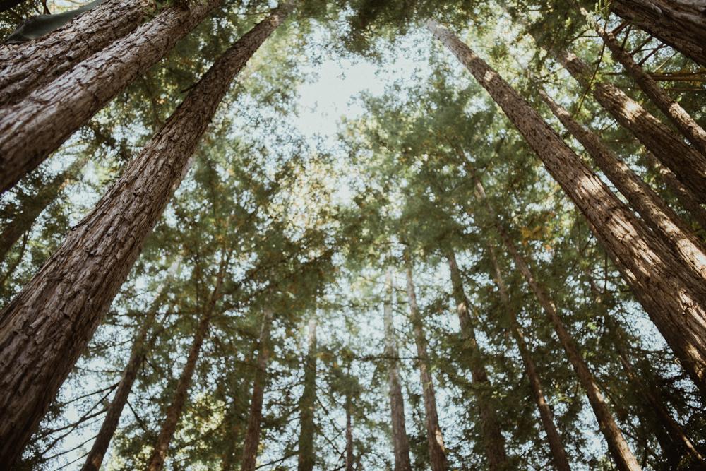 Santa-Cruz-Redwoods-wedding-at-Pema-Osel-Ling-27.jpg
