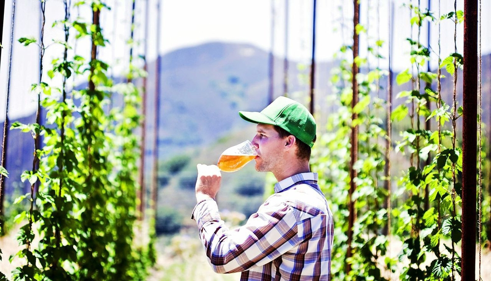 BROTHERS TALENTED    Toro Creek Brewing Company founder Brendan Cosgrove employed the talents of his brothers Caleb McLaughlin, brewmaster, and Kyle Batoor-Cosgrove, farmer, to create Toro Creek Farms. The operation produces organic hops, bushels of fresh barley, and a range of herbs, veggies, and citrus on the family-owned land.    PHOTO BY DUMMIT PHOTOGRAPHY