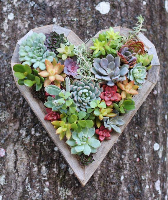 succulentheart.jpg