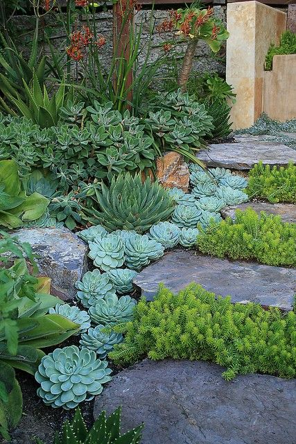 succulents path.jpg