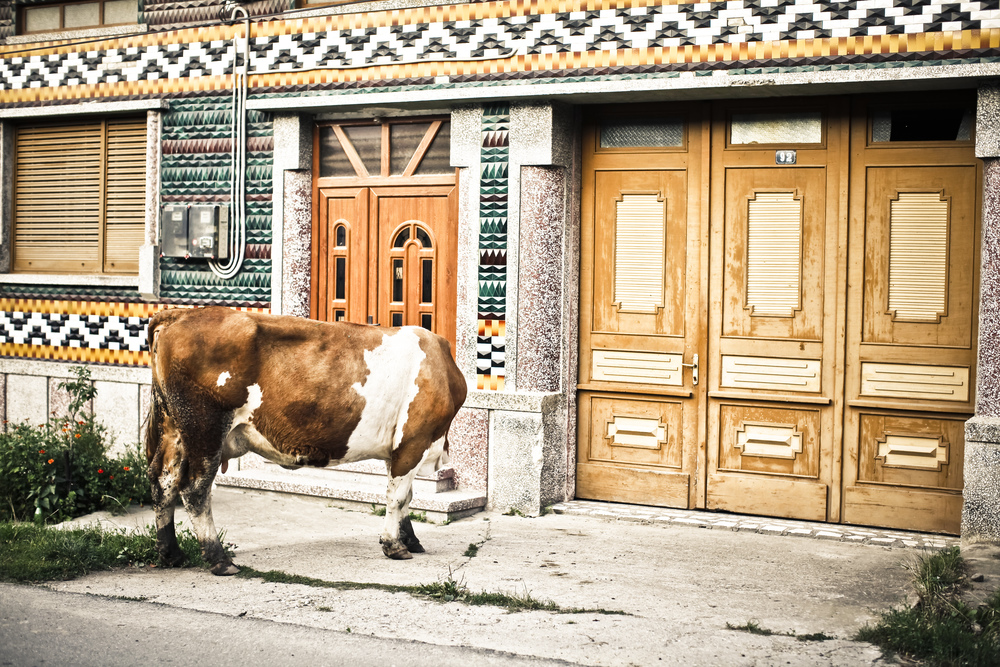 Roemenië-19.jpg
