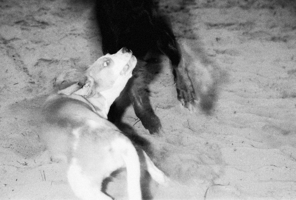 honden-3.jpg