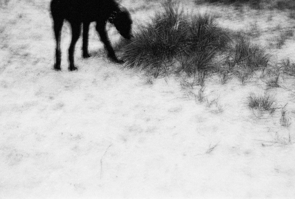 honden-5.jpg