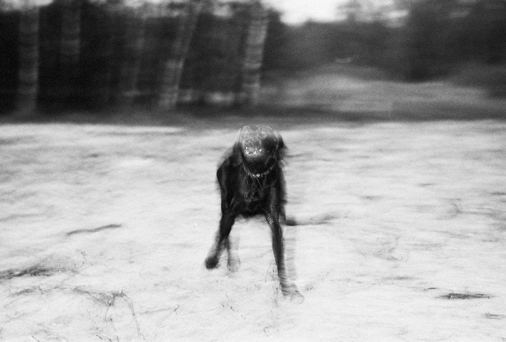 honden-8.jpg