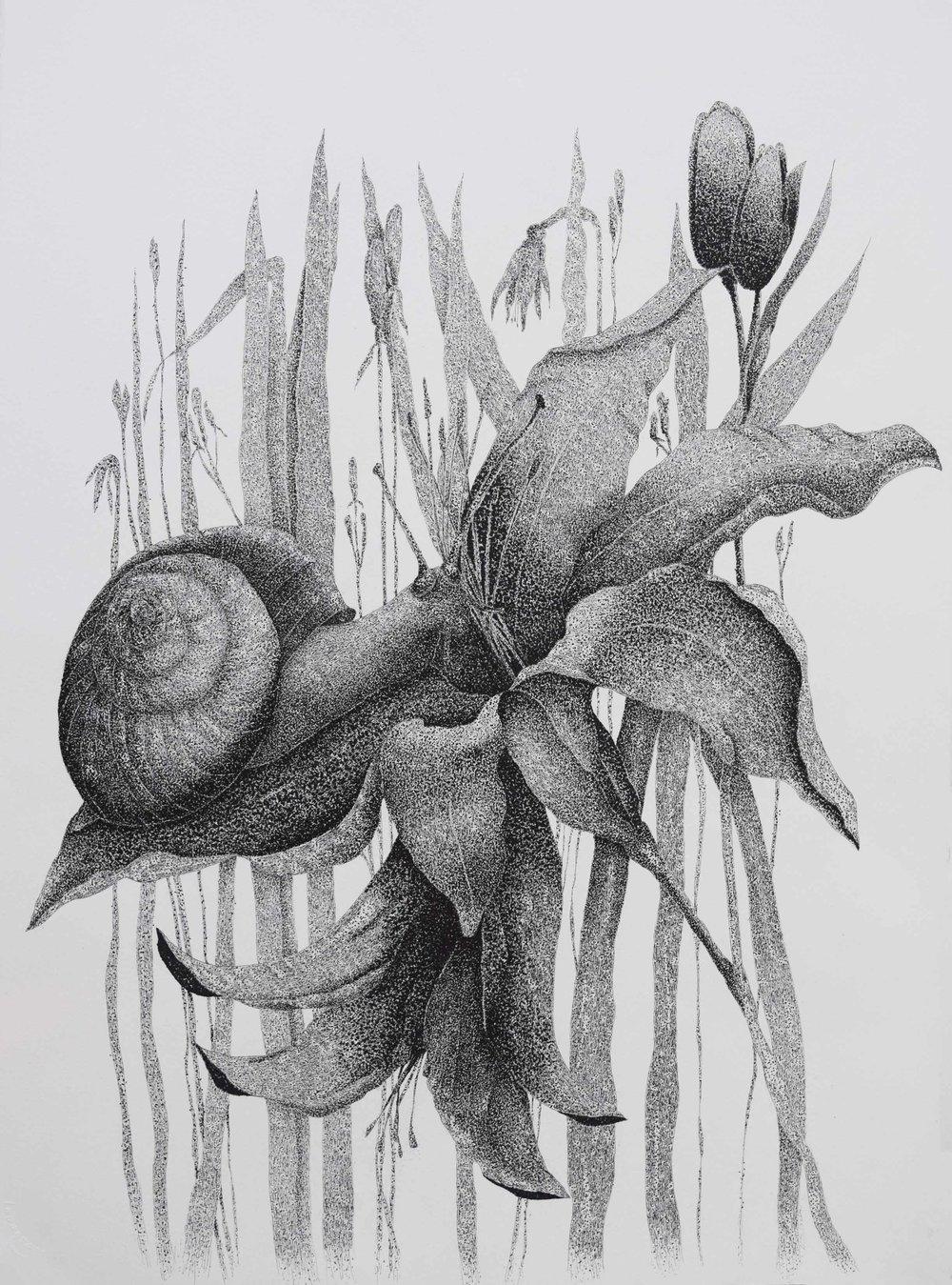 Snail-on-Daylily.jpg
