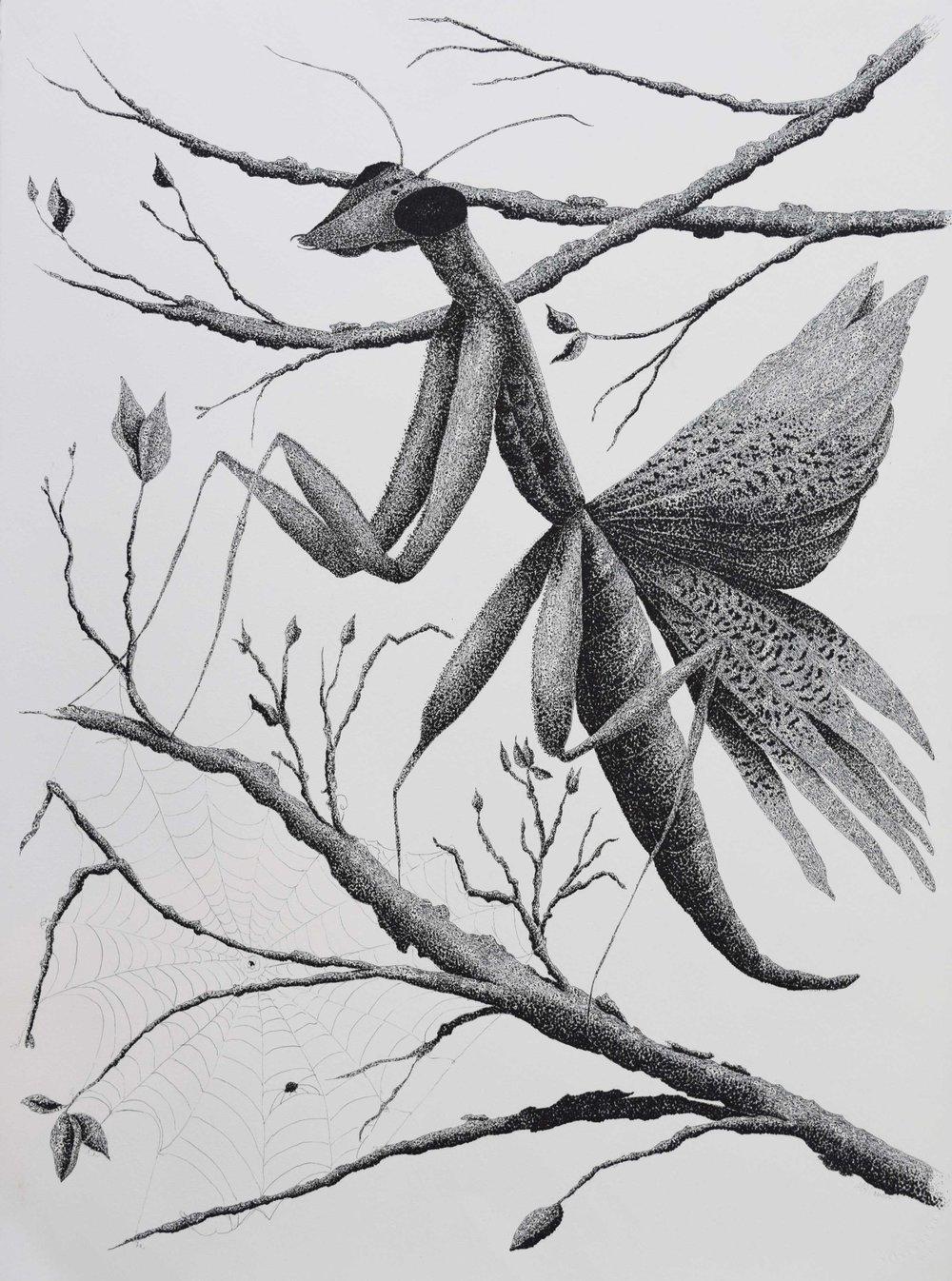 Praying-Mantis-or-Mantid-'Matilda'.jpg