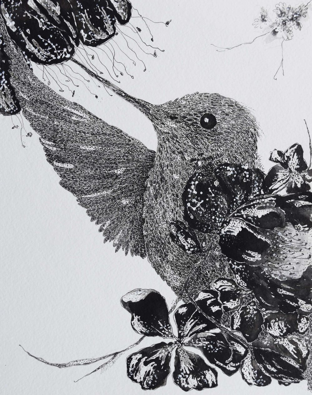 Hummingbird-and-Flowers.jpg