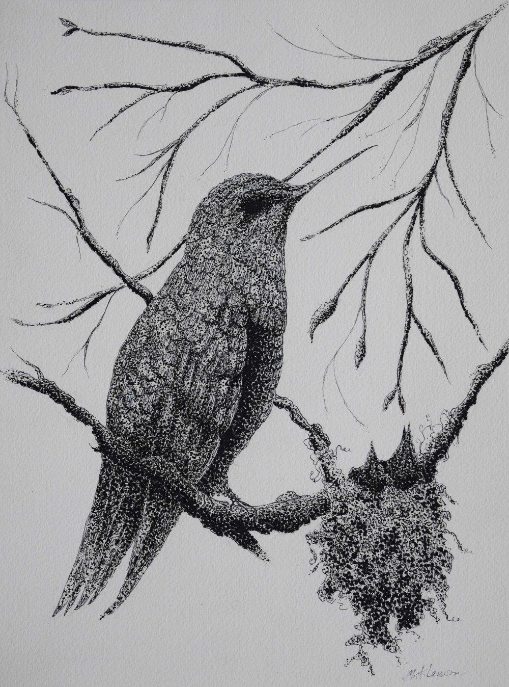 Hummingbird-and-Nest.jpg