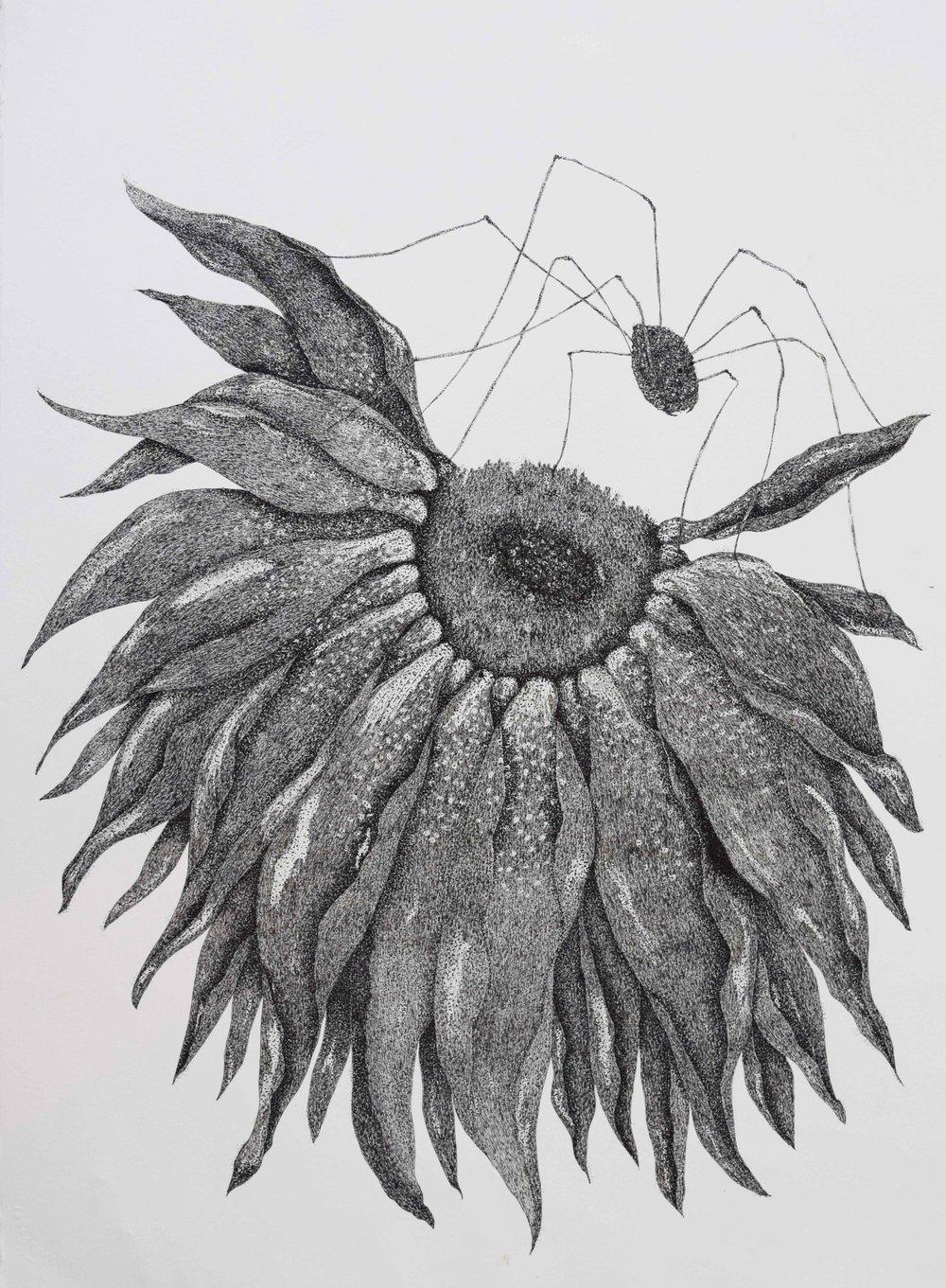 Sunflower-and-Daddy-Long-Legs.jpg