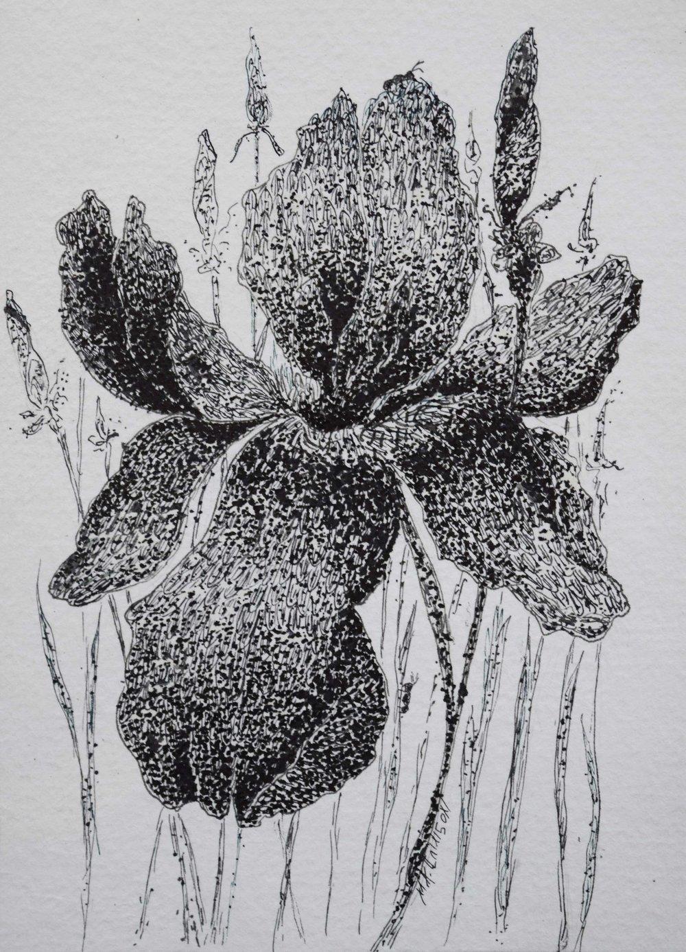 Flower-and-Ants.jpg