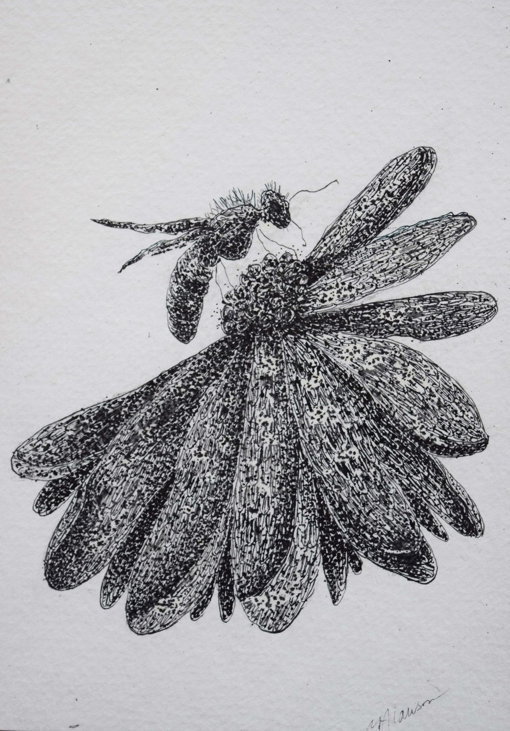 Bee-on-Flower.jpg