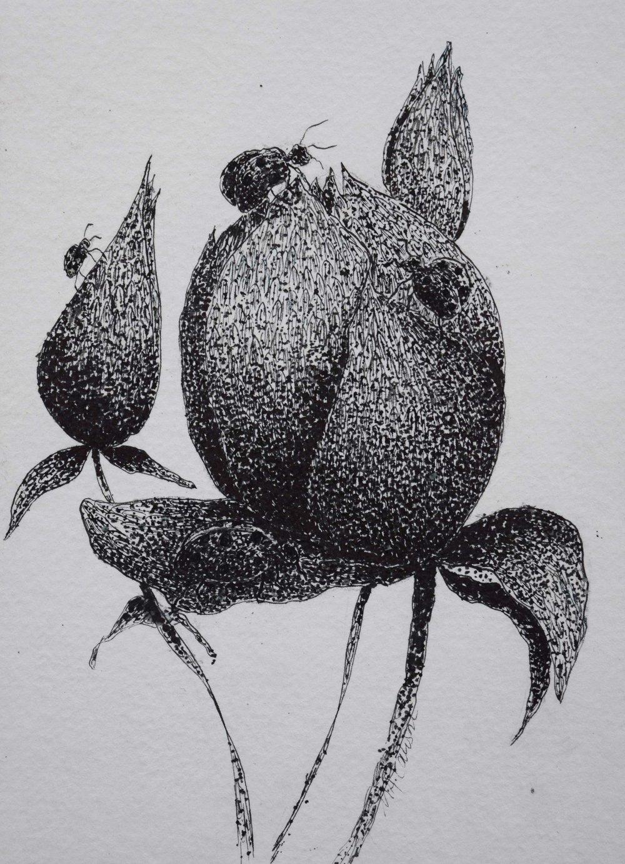 Ladybugs-on-Flower-bud.jpg