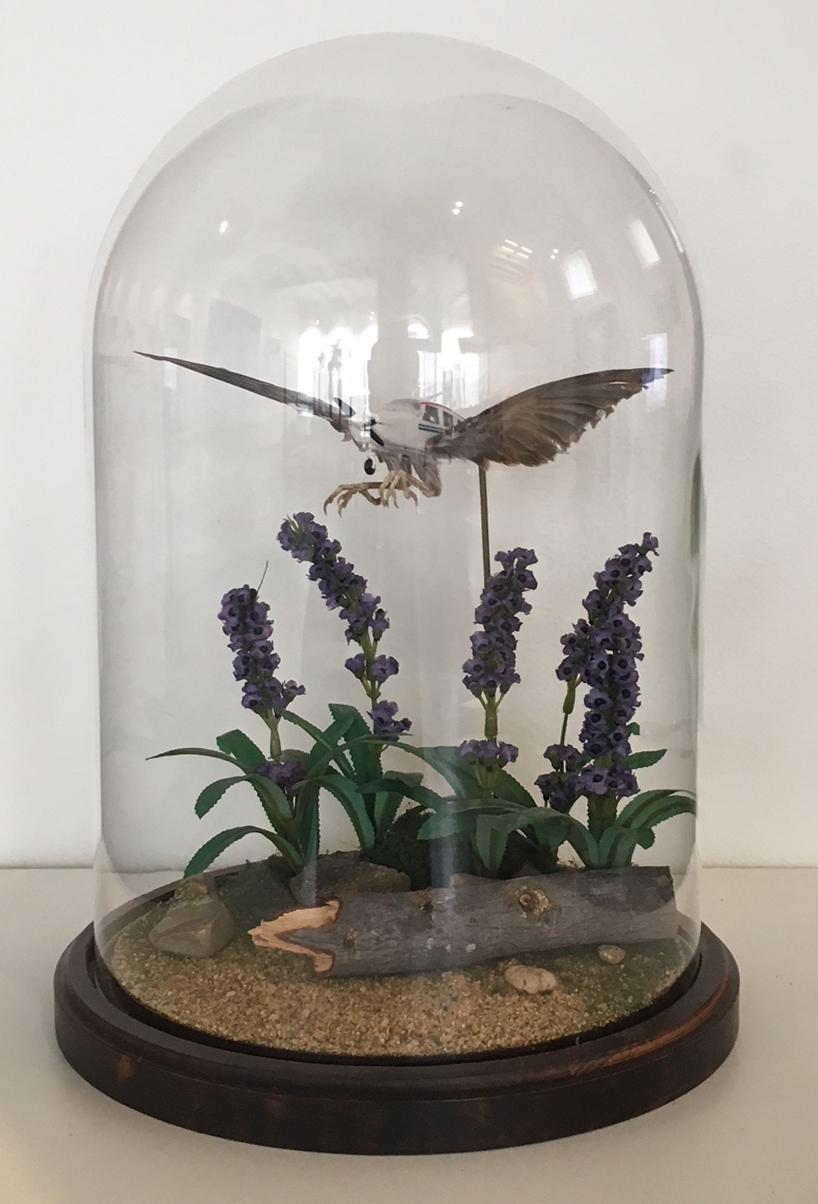 Rare Bird (Sparrow #2)
