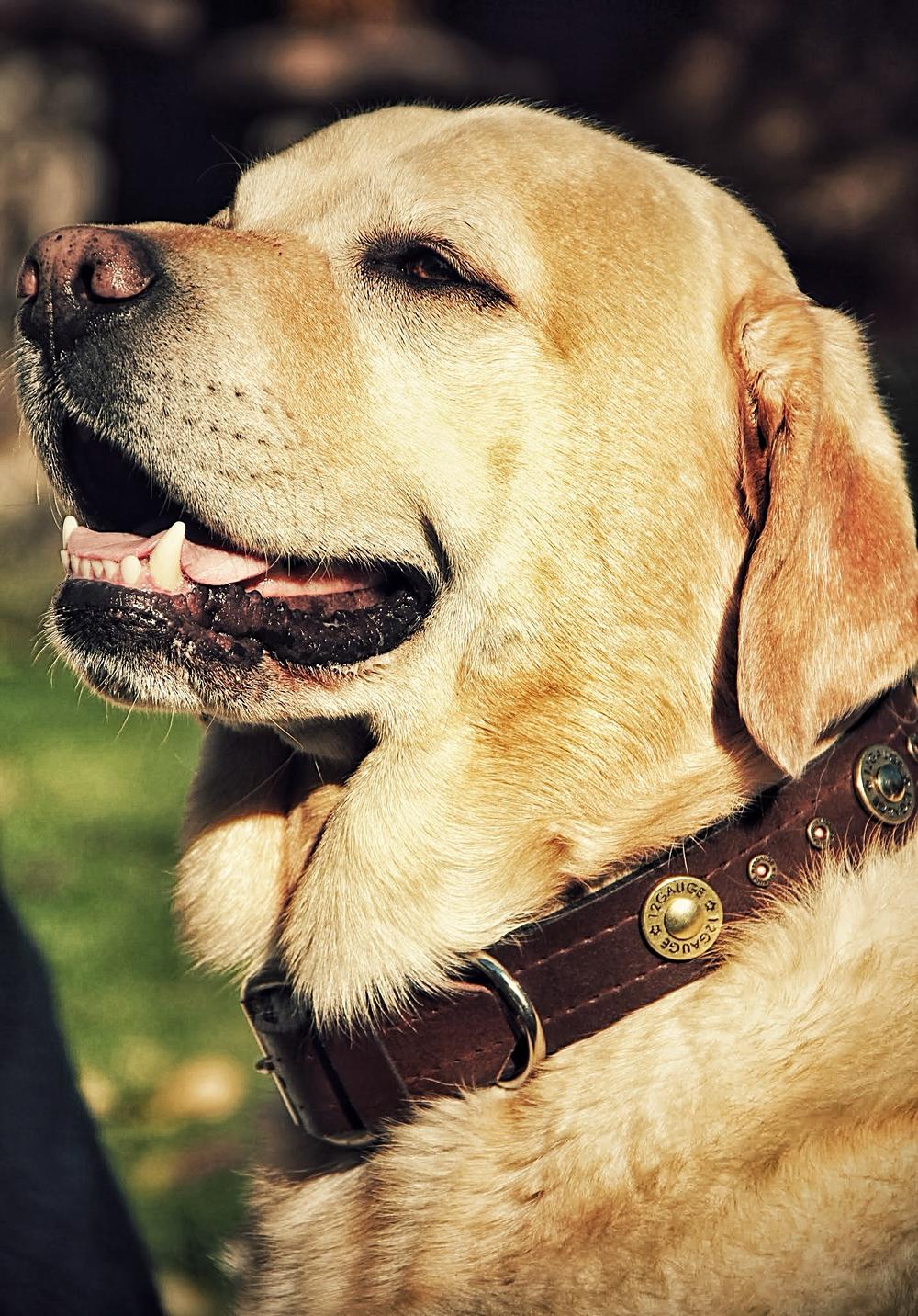 DogCollar006FINAL.jpg