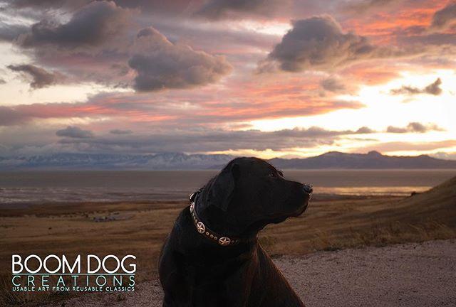🌅🐶#boomdogcreations #dogcollar #dogoftheday #instadogs #boomdog #dogsofinsta #dogs #sunset