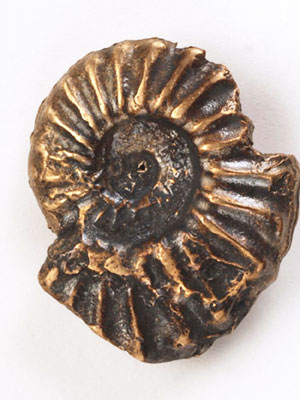 Ammonite Button BNA-232