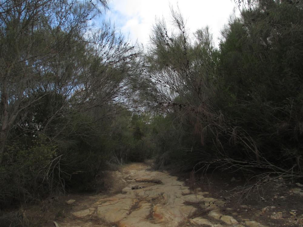 A pathway through...