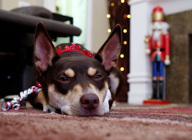 Christmas is tired.