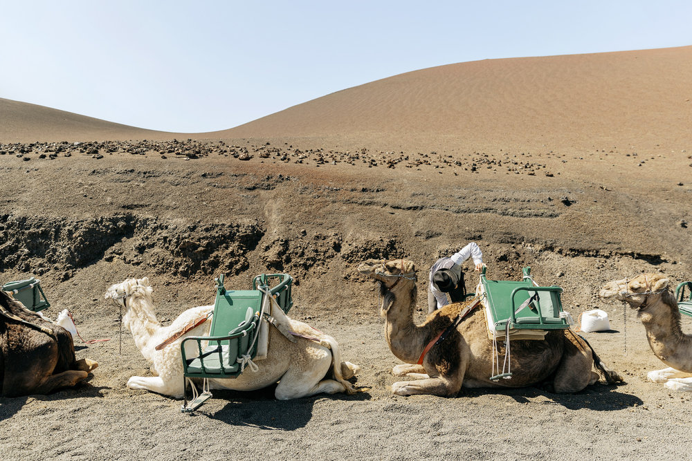 A man tends to his camels on Lanzarote in the Canary Islands by Rebecca Stumpf, Denver Boulder Colorado Editorial and Commercial Photographer.
