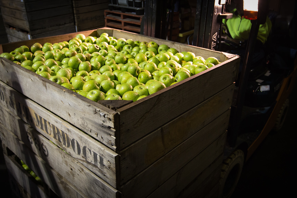 21-Lenswood-Apples-1464.jpg
