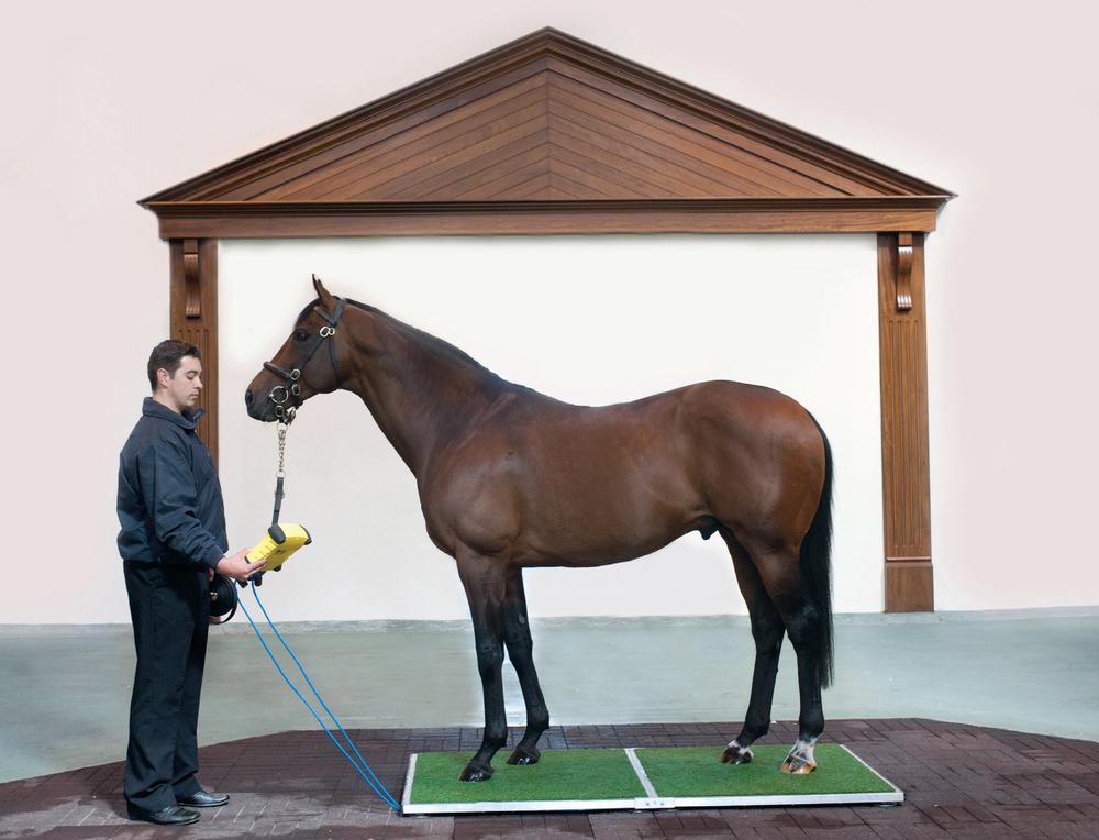 Horseweigh main pic.jpg