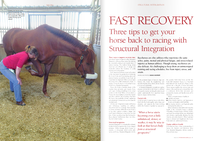 "Three ways to improve recovery time Specialised equine bodywork called Structural Integration addresses these issues by reducing the cumulative physical and mental stress of intense training. The method brings about improved and efficient use of energy and drastically reduces the incidence of costly training and racing injuries. Even experienced trainers may not be aware of the important role gravity has in balancing the horse's body and how training stress and physical injuries can pull the horse's body out of gravitational alignment. When a horse starts becoming even a little unbalanced, slower, or weaker, it may be wise to look at that horse's body from a structural perspective. Fascia, the body's connective tissue, is the medium that surrounds each muscle, bone, and organ, holding everything in its correct position in the body. When a horse strains a muscle, the fascia tightens around the injured area like a splint to aid in healing. Over time the fascia may gradually shorten, tightening and adjusting to protect and accommodate the misalignments. A body out of alignment creates inefficiency and imbalances resulting in stiffness, discomfort and loss of energy. These translate to slower race times. When the horse's body is in less than optimal condition, fatigue and small injury imbalances compromise recovery time. Slower race times may often be traced to these physical inefficiencies that, over time, become locked in place. Structural integration Structural Integration is scientifically validated bodywork that reorganises the horse's integral structure. Unlike massage which focuses on muscles, or chiropractic which works with nerves and bones, Structural Integration works on the protective layers of fascia to align and balance the body by lengthening and repositioning the fascia, which allows muscles to move more efficiently. A Structural Integration practitioner applies pressure and strokes to the body in a defined and specific manner, working the entire fascial system systematically from superficial tissue layers to deeper, intrinsic tissue. Fascia's role A curious part of anatomy, fascia is the fabric that holds the body together, gives shape and structure, and supports the body working within the bounds of gravity (as opposed to the popular belief that bones provide the body with structure). Fascia is so important that without it we would all collapse on the ground into a big pile of bones and tissue. Fascia weaves together the various parts and pieces of the anatomy and connects them into a continuous whole that surrounds and protects the muscles and literally every cell in the body. When connective tissue is healthy, it: l is pliable and elastic l allows muscles, tendons, and ligaments to shorten and lengthen with flexibility l lets muscles, tendons, and ligaments glide unimpeded by adhesions. When imbalances exist within the body, the health of the connective tissue is affected. Unhealthy connective tissue is thicker, harder, and much less resilient. It becomes dehydrated and shortens, significantly affecting how the muscles and joints function. When restricted fascia is released and lengthened, the horse's body returns to optimal performance. Equine athletes benefit Now that you have a basic understanding of fascia's role, function, and behaviour, here's how Structural Integration delivers results in three primary areas.  Reducing stress To fully understand how Structural Integration changes stress responses, we need to delve a little into the horse psyche. In the wild, physically compromised horses are at risk of losing their lives to predators. Their bodies will compensate any way they can to avoid appearing vulnerable. This instinct is hard-wired into their brains to keep mountain lions from singling them out as weak and eating them. When fascial restrictions and sore muscles produce pain and limitations in movement, everything in the horse's environment becomes threatening. As any experienced trainer knows, horses work hard to hide physical issues, making it hard to know how to help them get better.  When they are brought back to balance and optimal functioning, horses experience a sense of ease in their physical body that translates to a renewed confidence in the ability to deal with adverse situations. Such horses become more focused in their work, less distractible, and less likely to overreact to external stimuli; In other words, energy is not wasted. Bob, a Belgian/thoroughbred gelding, was worried and defensive about being touched. His owner reported him as unsure of himself in his work. After the second session I noticed his behaviour shifting. Instead of stepping away, he practically danced into my hands, especially when I worked his hind end. He nuzzled and groomed me, then stood relatively still for the work except when he exuberantly showed me where he wanted me to work next. ""He was a different horse! Bob felt more relaxed and sure of himself than he's ever been. No more evasive, get-out-of-work tactics and he no longer reacts to every distraction,"" said owner Amy Ruge. Efficient use of energy Reducing stress automatically affects energy in a positive way. When restrictions in the fascia are resolved, muscles glide more easily and are able to work in sync for optimal locomotion. Less energy is used up in the exhausting effort to compensate for inefficiencies of movement. The burden of restriction is lifted and the body is supported by gravity rather than fighting against it. With freedom of movement and efficient use of energy, horses are less stressed from training and racing and recover faster from their physical exertion. Mucho Grande, a thoroughbred, struggled to get his hind end underneath him and had a roached back. His hind legs tracked outside his front feet (a great feature in a racehorse) but didn't reach very far forward. After two sessions, the roached back was gone and he had gained four inches in his stride. After rebalancing his rib cage and barrel, he gained a couple more inches in his stride and movement became effortless. Before, minimal effort made him sweat. Now, harder work doesn't. Another way Structural Integration contributes to increased energy and faster recovery is by resolving restrictions in the rib cage. With this issue addressed, vital capacity is increased, more oxygen is made available to the tissues, and less lactic acid builds up in the muscles. Heart and respiratory rates return to normal quicker and the soreness and stiffness that comes from extreme exertion is significantly decreased. ""Structural Integration can help resolve old injuries that could otherwise contribute to further compensations, injuries, and prolonged healing time"" Preventing injuries Although the contributing factors to injuries are vast and complicated, many can be prevented. Recovery time is limited to the normal course of athletic endeavour and not to the extended time required to heal from avoidable injury. A healthy fascial system is durable and elastic. Its prime function, supporting the body's internal structures, cannot be compromised if future injury is to be avoided. A horse working in balance with his innate potential is at much less risk. Structural Integration can help resolve old injuries that could otherwise contribute to further compensations, injuries, and prolonged healing time. Individual potential aside, improved performance and greater success in the racing industry is the result of influencing structure in an enduring way. Structural Integration can have a profound and long-lasting effect that precludes time lost to training and racing related injuries. What is every racehorse trainer's goal? To win races. More power, more speed and an effortless gallop are all things that Structural Integration works to achieve. With balance, flexibility, focus, and healthy fascia, horses can reach their innate potential, use available energy constructively, suffer less from stiffness, aches and pains, prevent avoidable injury, and recover quickly from the exertions of training and racing. All this adds up to healthy horses and a financially rewarding career."
