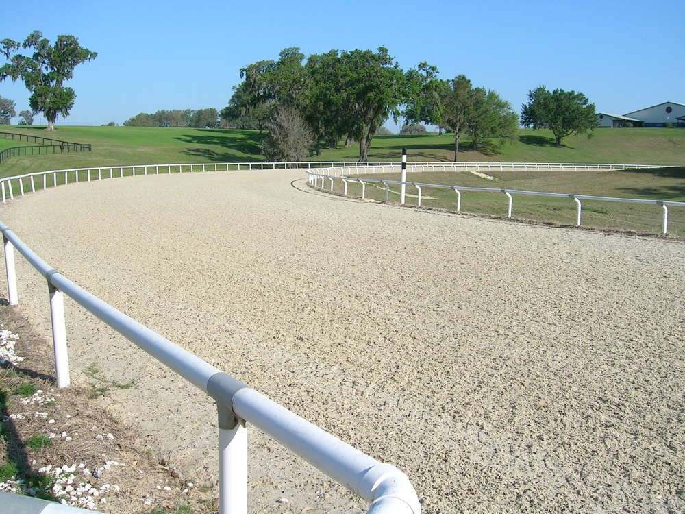 equestrian-surfaces.jpg