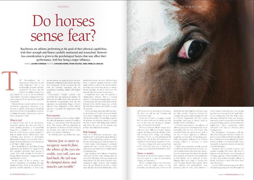 Horse_Fear.jpg
