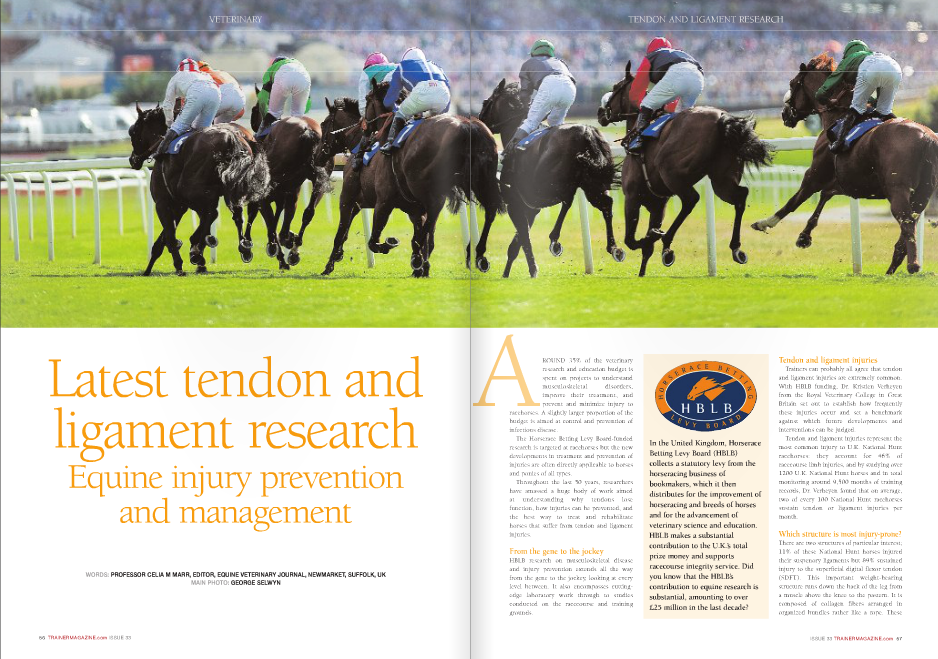"ROUND 35% of the veterinary research and education budget is spent on projects to understand musculoskeletal disorders, improve their treatment, and prevent and minimize injury to racehorses. A slightly larger proportion of the budget is aimed at control and prevention of infectious disease. The Horserace Betting Levy Board-funded research is targeted at racehorses but the new developments in treatment and prevention of injuries are often directly applicable to horses and ponies of all types. Throughout the last 50 years, researchers have amassed a huge body of work aimed at understanding why tendons lose function, how injuries can be prevented, and the best way to treat and rehabilitate horses that suffer from tendon and ligament injuries. From the gene to the jockey HBLB research on musculoskeletal disease and injury prevention extends all the way from the gene to the jockey, looking at every level between. It also encompasses cuttingedge laboratory work through to studies conducted on the racecourse and training grounds. A Tendon and ligament injuries Trainers can probably all agree that tendon and ligament injuries are extremely common. With HBLB funding, Dr. Kristien Verheyen from the Royal Veterinary College in Great Britain set out to establish how frequently these injuries occur and set a benchmark against which future developments and interventions can be judged. Tendon and ligament injuries represent the most common injury to U.K. National Hunt racehorses: they account for 46% of racecourse limb injuries, and by studying over 1200 U.K. National Hunt horses and in total monitoring around 9,500 months of training records, Dr. Verheyen found that on average, two of every 100 National Hunt racehorses sustain tendon or ligament injuries per month. Which structure is most injury-prone? There are two structures of particular interest; 11% of these National Hunt horses injured their suspenory ligaments but 89% sustained injury to the superficial digital flexor tendon (SDFT). This important weight-bearing structure runs down the back of the leg from a muscle above the knee to the pastern. It is composed of collagen fibers arranged in organized bundles rather like a rope. These fibers are embedded in tendon matrix, a complex of molecules that supports the strength and elasticity of the tendon. The matrix also surrounds tenocytes, the cells critical to maintaining the health of the tendon. To function effectively, the tendon must not only be stretchy and strong thus able to sustain the massive load generated when the hoof hits the ground at full gallop, but it must also be elastic and able to recoil effectively to flex the limb. All three elements – the fibers, the matrix, and the tendon cells – have been studied to better understand how they work together and what happens at the molecular, cellular, and fiber levels that leads to tendon injury. Why are tendons prone to injury and how can this be prevented? Tendon injury is most likely influenced by both nature (in the form of the horse's genetic makeup) and nurture (in the form of specific factors that it is exposed to during training such as speed, distance, and surface). If we can understand these factors, strategies to reduce the risk may follow and this has been an important underlying principle behind much of HBLB-funded research over the past five decades. Dr. Verheyen found that risk factors for tendon and ligament injury are increasing age, increasing race distance, and specific training facility, but cumulative gallop distance and number of days spent in jump schooling did not affect the odds of injury. Interestingly there was no difference in incidence of tendon and ligament injury in horses that entered National Hunt racing after a career on the flat, compared to those that had been produced specifically for National Hunt. Looking at exercise diaries for the 30 days prior to injury, Verheyen concluded that increasing accumulated race distance is associated with higher odds of winning a race but also increases odds of tendon and ligament injury. Galloping during training did not affect the odds of sustaining a tendon or ligament injury but did increase the odds of winning prize money. Good and bad genes? A very recent study, performed by Dr. Lucinda Tully, also from the Royal Veterinary College, has shown that genetic makeup can contribute to the risk of superficial digital flexor tendon injury. Two specific genes were linked to tendon injury: one lowered the odds and the other increased the odds of a horse sustaining a SDFT injury. Much more research is needed to understand the role of these genes and the work also needs to be repeated in a much larger group of horses to confirm the results. Nevertheless this is a first step towards understanding how genetic factors interlinked with environmental factors can affect the likelihood of injury in individual horses. Repeated microtrauma damages cells, matrix, and fibers Although the tendon injury may become detectable on one specific occasion – often during a races – tendon and ligament injuries are the result of cumulative degeneration with repeated cycles of loading and ongoing micro-trauma affecting the fiber structure, the tendon cells, and the tendon matrix. Professor Janet Patterson-Kane at the University of Glasgow in Scotland focuses on looking at how stiffness of the tendon matrix signals to the tendon cells to produce healthy fibers. The incidence of SDFT injury increases with age. Professor Peter Clegg of the University of Liverpool has been researching the mechanisms that allow the tendon to extend and recoil rapidly and repeatedly during gallop to determine where within the tendon structure microdamage occurs, to establish how fatigue loading alters cell function, and look at age-related effects. The tendon fibers are organized into bundles called fascicles. Sliding of these fascicles allows the tendon to extend, and the fascicles' helical structure allows rotation and provides a recoiling spring action. Clegg has shown that as the tendon ages, the amount of rotation and recoil decreases. Repetitive loading damages cells within the tendon and causes matrix proteins to degenerate. Damage occurring between the collagen fibers increases sliding and weakens the tendon fibers, contributing to a more injury-prone structure. Early diagnosis Injury to the SDFT is not necessarily associated with lameness except when it is very severe. The key clinical sign is swelling of the back of the forelimb, midway down the cannon bone. More severe injuries will cause swelling all down this area. The old name for tendon injury, the bowed tendon, relates to this classic appearance recognized by horsemen down the centuries. Ultrasound is used to confirm injury, document its severity, and monitor healing. On an ultrasound image, the normal SDFT is a uniform bright white oval shape in short axis (cross section) and is composed of densely packed linear echoes in long axis, reflecting bundles of fibers. With acute injury, black holes appear within the tendon, as fibers are torn and the defect fills with blood clots and early inflammatory cells. As the tendon heals, it gradually fills in with brighter, denser tissue, and linear echoes reform. But if microtrauma precedes full-blown injury, can we identify it and prevent the horse from developing career-limiting injury? Answering that question was the focus of a project conducted by Dr. Charlotte Avella, with guidance from a group of senior tendon researchers based at the University of Cambridge and the Royal Veterinary College. Dr. Avella selected 148 horses from ten National Hunt yards and examined them at three-month intervals over two seasons. The overall prevalence of injury was 24%, and a third of these horses had injury in both forelimbs. But Dr. Avella was not able to predict which horses would develop injury based on the ultrasound findings. Better ways of predicting injury are needed. Developing novel and effective treatments for tendon injury SDFT injury is a recurrent problem. Once a tendon has been injured, it is much more likely to happen again because scar tissue forms within the injury site. This scar tissue is weaker than healthy tendon and tends to be damaged again when training resumes. Regenerative medicine is the ""process of replacing or regenerating human cells, tissues or organs to restore or establish normal function."" Stem cell therapy is an important component of regenerative medicine; stem cells currently in use are undifferentiated or multipurpose cells that have the capacity to change into many of the tissues that make up the mammalian body. They can be found in embryos but also in various adult tissues, such as bone marrow. In horses, stem cells can be collected from bone marrow, processed in the laboratory, and injected into tendons to allow healthy tissue to regenerate where scar tissue might have otherwise formed. Professor Roger Smith of the Royal Veterinary College has shown that in National Hunt racehorses with SDFT injury, stem cell therapy reduced the re-injury rate to around 26% whereas in previous studies of similar horses treated in more conventional ways, it was 50-55%. An important limitation in this approach is that very small numbers of stem cells are harvested in this way. Stem cells can also be collected from the umbilical cord at the time of birth, with no harm to the foal. These cells are known as ""embryonic"" cells. HBLB funding has enabled Dr. Debbie Guest of the Animal Health Trust to study embryonic stem cells as an alternative treatment. The benefit is that this would avoid the need to collect the stem cells from the affected horse after the injury, which delays the onset of treatment. Embryonic stem cells could be prepared ready for use as an ""off-theshelf"" product. Dr. Guest showed that the embryonic cells were able to migrate to other injury sites in the tendon whereas adult stem cells stayed near to the injection site. Embryonic cells were not rejected when injected into horses unrelated to the foal from which they were derived, an important feature if products designed for use in any horse are to be developed. Pluripotent stem cells – a scientific breakthrough If multipotent cells are useful, pluripotent might be even better. The term pluripotent defines stem cells that are able to self-renew indefinitely and give risk to virtually all cell types in the body. Best of all would be if pluripotent cells could be generated from easily obtainable adult cells like skin cells. Although researchers have been trying for almost 20 years, until recently this amazing biological feat had only been achieved in human and mouse cells. In March 2014, Dr. Xavier Donadeu at the Royal (Dick) School of Veterinary Studies in Edinburgh reported that he had generated equine plurIpotent stem cells from adult horse skin cells. This represents a major scientific breakthrough that not only offers a route to new treatments for tendon injury but also may lead to cures for previously untreatable conditions like motor neuron disease or grass sickness. Don't forget the jockey! While much of HBLB's musculoskeletal research focuses on horse molecules, genes, cells, and tissues, the impact of the jockey deserves some attention. The additional mass of a rider increases energetic cost of locomotion, and jockeys potentially improve stability during galloping and reduce the risk of injury. In collaboration with the British Racing School, Dr. Thomas Witte from the Royal Veterinary College is comparing riding styles between experienced and inexperienced jockeys, using force transducers in the stirrups and combined inertial and GPS technology on the jockey. Dr. Witte's preliminary work has confirmed that deviations in ""horse-rider harmony,"" or synchronicity of jockey movement relative to the horse, can have a significant impact on performance. While the underlying concept may not seem novel to trainers, this is the first serious attempt to introduce science to the training of riders. It is only by quantifying jockey-racehorse biomechanical interactions that the effects of interventions can be documented and refined. The future? Tendon and ligament injury remains a major challenge for racehorse trainers and vets, but collectively the wide range in research in this area has identified factors that lead to injury; provided an in-depth understanding of the molecular, cellular, and biomechanical events in the tendon; and produced novel approaches to treatment available now and with huge future potential. The work is not finished – who knows what the next decade of research will take us? Because of HBLB support, scientists in veterinary institutes and universities across the UK lead the field internationally in this important area of research. n"