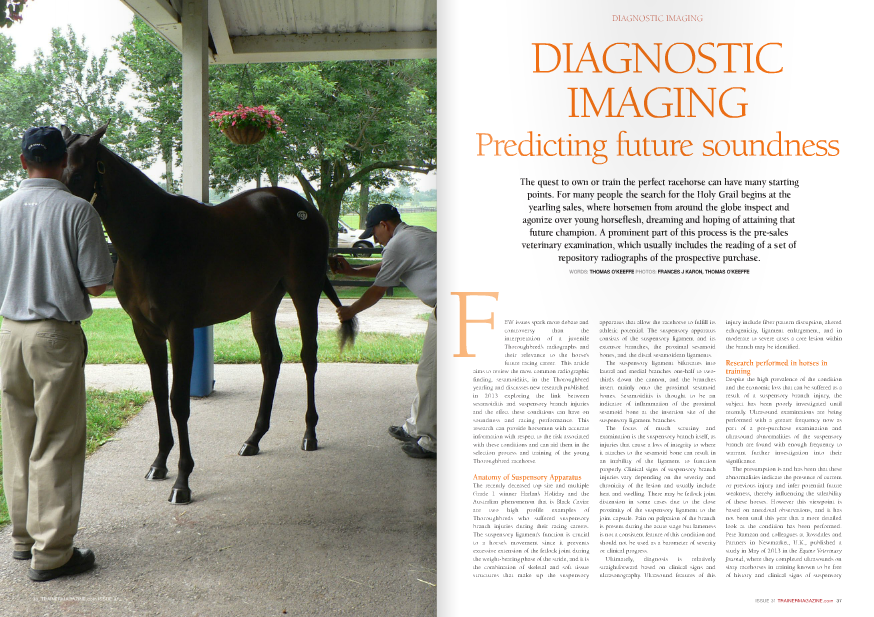 "EW issues spark more debate and controversy than the interpretation of a juvenile Thoroughbred's radiographs and their relevance to the horse's future racing career. This article aims to review the most common radiographic finding, sesamoiditis, in the Thoroughbred yearling and discusses new research published in 2013 exploring the link between sesamoiditis and suspensory branch injuries and the effect these conditions can have on soundness and racing performance. This research can provide horsemen with accurate information with respect to the risk associated with these conditions and can aid them in the selection process and training of the young Thoroughbred racehorse. Anatomy of Suspensory Apparatus The recently deceased top sire and multiple Grade 1 winner Harlan's Holiday and the Australian phenomenon that is Black Caviar are two high profile examples of Thoroughbreds who suffered suspensory branch injuries during their racing careers. The suspensory ligament's function is crucial to a horse's movement since it prevents excessive extension of the fetlock joint during the weight-bearing phase of the stride, and it is the combination of skeletal and soft tissue structures that make up the suspensory F apparatus that allow the racehorse to fulfill its athletic potential. The suspensory apparatus consists of the suspensory ligament and its extensor branches, the proximal sesamoid bones, and the distal sesamoidean ligaments. The suspensory ligament bifurcates into lateral and medial branches one-half to twothirds down the cannon, and the branches insert mainly onto the proximal sesamoid bones. Sesamoiditis is thought to be an indicator of inflammation of the proximal sesamoid bone at the insertion site of the suspensory ligament branches. The focus of much scrutiny and examination is the suspensory branch itself, as injuries that cause a loss of integrity to where it attaches to the sesamoid bone can result in an inability of the ligament to function properly. Clinical signs of suspensory branch injuries vary depending on the severity and chronicity of the lesion and usually include heat and swelling. There may be fetlock joint distension in some cases due to the close proximity of the suspensory ligament to the joint capsule. Pain on palpation of the branch is present during the acute stage but lameness is not a consistent feature of this condition and should not be used as a barometer of severity or clinical progress. Ultimately, diagnosis is relatively straightforward based on clinical signs and ultrasonography. Ultrasound features of this injury include fiber pattern disruption, altered echogenicity, ligament enlargement, and in moderate to severe cases a core lesion within the branch may be identified. Research performed in horses in training Despite the high prevalence of the condition and the economic loss that can be suffered as a result of a suspensory branch injury, the subject has been poorly investigated until recently. Ultrasound examinations are being performed with a greater frequency now as part of a pre-purchase examination and ultrasound abnormalities of the suspensory branch are found with enough frequency to warrant further investigation into their significance. The presumption is and has been that these abnormalities indicate the presence of current or previous injury and infer potential future weakness, thereby influencing the saleability of these horses. However this viewpoint is based on anecdotal observations, and it has not been until this year that a more detailed look at the condition has been performed. Pete Ramzan and colleagues at Rossdales and Partners in Newmarket, U.K., published a study in May of 2013 in the Equine Veterinary Journal, where they completed ultrasounds on sixty racehorses in training known to be free of history and clinical signs of suspensory been in full training up until the time of the ultrasound examination. This study highlights the need for further research into the suspensory branch in racehorses to determine whether these abnormalities are predictive for future clinical injury. Sesamoiditis and Suspensory Branch Desmitis Following the same theme in the U.S., Sarah Plevin and Jonathan McLellan of Florida Equine Veterinary Associates in Ocala have done extensive research on sesamoiditis and suspensory branch injuries and had two studies published in the Equine Veterinary Journal in August 2013. The first looked at the relationship between the radiographic signs of sesamoiditis in yearlings and whether they predispose these young horses to suspensory branch injury in their future racing careers. Sesamoiditis has always been believed to be associated with injury to the suspensory branch attachment, however no study has investigated the relationship between yearling sesamoiditis and the subsequent development of suspensory ligament branch injury in early racehorse training. Plevin and McLellan reviewed pre-sales radiographs of 291 clinically normal yearling Thoroughbreds and graded them for the presence of and/or the level of sesamoiditis present. Medical records for each of these horses during their first year of training were reviewed to identify cases of suspensory branch injury. The objective was to evaluate the usefulness of radiologic grading of yearling sesamoiditis as a marker for subsequent suspensory branch injury, which would allow veterinarians to more accurately provide prepurchase advice to their clients. All the horses in their study were trained at a single training center in Florida and all suspected cases of suspensory branch injury as exhibited by clinical signs were confirmed with diagnostic ultrasound. The study showed that yearlings with significant sesamoiditis at the time of the yearling sales are more likely to develop suspensory branch injury in the corresponding suspensory branch than those with mild or no sesamoiditis. In order to categorize it further, researchers proved that yearlings with severe sesamoiditis are five times more likely to develop clinical signs of suspensory branch injury within the first year of race training. This information provides veterinarians with a grading scale for reading radiographs of yearling's sesamoid bones with which they can appropriately advise their clients when it comes to the pre-purchase examination. This should not be seen as a negative by consignors and breeders, as information and studies such as this allow veterinarians to advise clients with confidence of the statistically low risk of future injury of the majority of sales horses with low grade sesamoiditis. branch injury or proximal sesamoid injury, in a bid to quantify the prevalence of the condition subclinically in a cohort of horses in training. The study revealed that nearly 7% of the horses were found to have what would be considered moderate ultrasound abnormalities, with no history of clinical suspensory branch injury. These are findings significant enough to preclude the horses from being permanently imported into Hong Kong for racing or to negatively impact acceptability to purchaser regardless of destination, yet these horses had no clinical signs and have Suspensory Branch Problems and Racing Performance The second study performed by McLellan and Plevin explored the effect suspensory branch injury can have on racing performance, including number of starts, interval to first race, career earnings, and ""speed figures"" and compared to a control group. Records were reviewed of 896 horses in training, with horses who suffered an injury of the suspensory branch between September of their yearling year and May of their two-year-old year were identified. These horses' race records were compared against their cohorts in the training group who served as the control group. All case horses were managed with stall rest and a controlled increasing exercise program with sequential ultrasound examinations and physical examinations every 30 days during their rehabilitation period. Racing data from this study was obtained from the Equibase website, and the average Equibase ""speed figure"" was used as a measure of performance. In the study, 9.5% of the horses were found to have suspensory branch injury, a figure that correlates well with previous research. The left front inside suspensory branch was found to be most commonly affected, which may be as a result of either the counterclockwise training routine placing an increased stress on this branch or other factors such as individual horse conformation, track surface, etc. Horses who suffered suspensory branch injury before May of their two-year-old year were significantly less likely to reach the racetrack than their contemporaries. Only two-thirds of the case horses made the racetrack by the end of their three-year-old season, compared to nearly 90% of the control group. Less than a third of the case horses started a race as a two-year-old, compared to over 60% of the control group. Also, McLellan and Plevin proved statistically that horses suffering from suspensory branch injuries have a significant increase in the number of days taken to achieve their first start. It was, however, demonstrated during the review of the data that the comparison of the speed figures of horses with previous suspensory injury and those that were free of the problem did not yield a difference, suggesting that horses with this type of injury who actually race successfully have a similar performance level to their matched controls. The other interesting conclusions from the study were that severe injuries to the suspensory branch had a 50% chance likelihood of reccurrence and that sesamoid bone abnormalities noted during the examination of the medical records coincided with a more severe suspensory branch injury and reduced racing performance. Discussion The equine Thoroughbred suspensory apparatus is arguably the most biomechanically stressed part of the thoroughbred's anatomy and managing and treating suspensory branch injuries remains one of the most challenging problems that trainers and veterinarians encounter today. This places an even greater emphasis on accurate diagnostic imaging not only in its traditional guise as a diagnostic tool in the face of an injury but also as an aid in predicting which horses may suffer from the condition in the future The three studies mentioned above demonstrate that injury to the suspensory branch is a serious career-limiting injury and reiterate how the anatomical relationship between sesamoid bone and suspensory ligament means that often, bone and soft tissue injuries occur simultaneously. The studies show that a very large percentage of young Thoroughbreds have, on radiographic examination, what would be considered strictly by textbook definition an ""abnormal"" sesamoid. However, the conclusion from should not be that any young horse with an abnormal sesamoid must be avoided; rather, that we now have an accurate grading system for sesamoiditis in yearlings that can aid veterinarians in predicting the likelihood of that horse developing a suspensory branch injury. The grading system should allow for less yearlings to be criticized for having sesamoiditis at sales, increasing their prospects of finding a buyer and allowing those that are found to have significant sesamoiditis, and consequently high-risk candidates for a suspensory problem, to be managed and trained in the appropriate fashion for optimum chance of making the racetrack. This is especially relevant when the studies proved thatindividual cases with suspensory branch injury who make it to the racetrack achieve comparable speed figures with respect to their contemporaries, showing them to have no difference in racing ability. The high prevalence of both sesamoiditis and suspensory branch injury in young Thoroughbreds highlights the need for caution and more research into the area for a greater understanding of the significance of these findings and to prevent their overinterpretation. Unfortunately, despite the many options available to the trainer and veterinarian for the treatment of suspensory branch injury, this is definitely one scenario where prevention is better than cure and why regular diagnostic imaging, coupled with a symbiotic relationship between trainer and veterinarian in the management of subclinical cases, should lead to the best outcome for all concerned. As a result of the dedication of veterinarians on both sides of the Atlantic Ocean, our understanding of this troublesome condition has grown exponentially over the past twelve months and in the interests of horsemen and their racehorses, long may this continue to be the case. n"