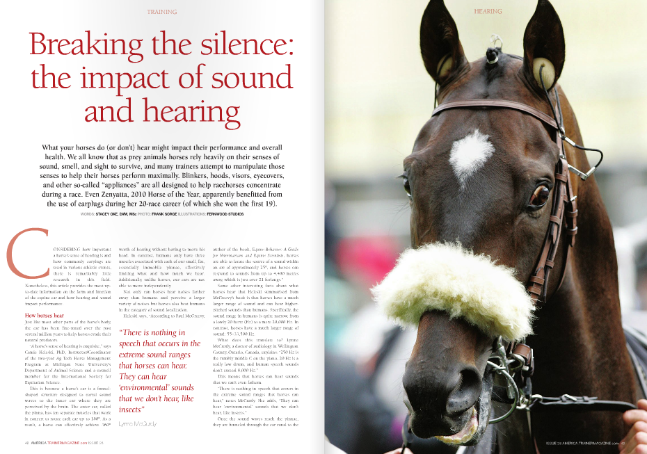 "ONSIDERING how important a horse's sense of hearing is and how commonly earplugs are used in various athletic events, there is remarkably little research in this field. Nonetheless, this article provides the most upto-date information on the form and function of the equine ear and how hearing and sound impact performance. How horses hear Just like most other parts of the horse's body, the ear has been fine-tuned over the past several million years to help horses evade their natural predators. ""A horse's sense of hearing is exquisite,"" says Camie Heleski, PhD, Instructor/Coordinator of the two-year Ag Tech Horse Management Program at Michigan State University's Department of Animal Science and a council member for the International Society for Equitation Science. This is because a horse's ear is a funnelshaped structure designed to corral sound waves to the inner ear where they are perceived by the brain. The outer ear, called the pinna, has ten separate muscles that work in concert to rotate each ear up to 180°. As a result, a horse can effectively achieve 360° C author of the book, Equine Behavior: A Guide for Veterinarians and Equine Scientists, horses are able to locate the source of a sound within an arc of approximately 25°, and horses can respond to sounds from up to 4,400 metres away, which is just over 21 furlongs."" Some other interesting facts about what horses hear that Heleski summarised from McGreevy's book is that horses have a much larger range of sound and can hear higherpitched sounds than humans. Specifically, the sound range in humans is quite narrow, from a lowly 20 hertz (Hz) to a mere 20,000 Hz. In contrast, horses have a much larger range of sound: 55–33,500 Hz. What does this translate to? Lynne McCurdy, a doctor of audiology in Wellington County, Ontario, Canada, explains: ""250 Hz is the rumbly middle C on the piano, 20 Hz is a really low drum, and human speech sounds don't exceed 8,000 Hz."" This means that horses can hear sounds that we can't even fathom. ""There is nothing in speech that occurs in the extreme sound ranges that horses can hear,"" notes McCurdy. She adds, ""They can hear 'environmental' sounds that we don't hear, like insects."" Once the sound waves reach the pinnae, they are funneled through the ear canal to the worth of hearing without having to move his head. In contrast, humans only have three muscles associated with each of our small, flat, essentially immobile pinnae, effectively limiting what and how much we hear. Additionally, unlike horses, our ears are not able to move independently. Not only can horses hear noises farther away than humans and perceive a larger variety of noises but horses also beat humans in the category of sound localization. Heleski says, ""According to Paul McGreevy, ""There is nothing in speech that occurs in the extreme sound ranges that horses can hear. They can hear 'environmental' sounds that we don't hear, like insects"" Lynne McCurdy eardrum, middle ear, and then inner ear. When sound waves ""strike"" the eardrum, the thin membrane vibrates, amplifying/ intensifying the sounds waves that subsequently causes the three small bones (malleus, inca, and stapes) in the middle ear and the structures in the inner ear to vibrate. Ultimately, those vibrations are metamorphosed into electric signals that stimulate the auditory (""hearing"") nerve that helps the brain interpret the electrical signals as sound…all in the blink of an eye. Speed of sound: does noise impact behaviour and performance? Does what a horse hear on the track impact their racing performance? For most horses, absolutely. According to equine behaviorist Robert M. Miller, DVM, no horse/trainer pair can reach its full potential unless the trainer understands ten specific traits that every horse inherits. Those traits include (but are not limited to) their inbred nature for flight; their perception and preparedness to flee; their uber quick time between their perception of danger and their physical response; a rapid desensitization to frightening stimuli compared to other species; and their ability to learn and remember. Hearing and sound perception are therefore important for trainers to consider, but given that horses have been evolving for about 45 million years yet domesticated for only about 5,000 years, it is no wonder that we haven't been able to ""temper"" some of those natural behaviors/senses, such as responding to sound and attempting to flee. One method that has helped performance horses ""fight"" their natural instincts and concentrate on the task at hand is the use of earplugs. Shutting out the noise Why use earplugs in Thoroughbreds? According to Kim Kelly, Hong Kong Jockey Club's Chief Stipendiary Steward, ""…the use of earplugs in races conducted by the [Hong Kong Jockey] Club is aimed at allowing for the attenuation or dampening of some of the auditory stimuli for nervous/flighty horses so as to enable them to focus during the race, whilst not completely blocking out all environmental noise/stimuli. Given the large, often vocal crowds which attend racing in this jurisdiction, the use of earplugs can result in otherwise flighty horses remaining calm, which may have a positive effect on their racing performance."" Earplugs are far more common in Standardbred racehorses, but according to Greg Maltby from Maltby Stables in Ontario, Canada, and a member of the Industry Code Committee for Equine Welfare Code in Canada, earplugs play an important role in Thoroughbreds as well. ""Earplugs help eliminate noises in the starting gate, especially the echoes that seem to drive the horses nuts,"" explains Maltby. ""In horseracing, we can't wait 1.5 years to make sure the horse is used to all the sounds on the track, so earplugs help with a horse's flight response, to deaden it a bit. They make the horse more useful and make their experience better."" Earplug ethics? Earplugs are apparently fairly innocuous but are not permitted by certain equine associations. For example, Equine Canada states that ""Horses must be shown without artificial appliances."" The British Horseracing Authority does permit earplugs; however, they stipulate: ""When any horse runs in a race with earplugs of any type, such plugs must not be removed during the course of the race."" Similarly, the Hong Kong Jockey Clubs states, ""Only earplugs of a design approved by the Stewards and the Veterinary Officer shall be permitted to be used on horses in races. When a horse is declared to race with earplugs, such earplugs must not be removed during the course of the race and must remain SOUNDS LIKE AN ULCER TO ME, DOC in place until after the horse has been unsaddled following the race. Earplugs shall not be used by horses wearing a hood."" Why such stringent rules regarding a simple plug of cotton (or foam or sponge)? ""One reason is that certain horses, such as dressage horses, are judged on behavior issues in addition to performance. In Thoroughbreds, it simply boils down to whoever crosses the finish line first,"" suggests Rick Arthur, DVM, Equine Medical Director of the California Horseracing Board. Kelly takes another stance and adds, ""If a horse were to be permitted to wear a hood in conjunction with earplugs, this may result in an almost complete removal of auditory senses."" ""Although there are bigger fish to fry when it comes to ethical issues in the horse industry, earplugs do effectively strip away one of a horse's most important senses,"" says Heleski. Other reasons for the different rules created by different organizations are not overt, which of course begs the question, do earplugs even work? ""Barry Abrams [a multiple graded stakes winning trainer whose horses have earned over $27 million to date] claimed a difficult filly one year but as soon as he put the earplugs in she turned into a stakes winner,"" recalls Arthur. Of course not all horses will turn around and become stakes winners, but Heleski notes, ""There is lots of anecdotal evidence that they [earplugs] do work based on the few blogs and forums."" Even if earplugs played only a small role in Zenyatta's career, her success story certainly suggests that they are worth trying. The final note Thoroughbred trainers don't necessarily want to ""calm their savage beasts"" either in the gate or during the race, but the available data on hearing and earplugs suggests that what horses hear can impact their health, performance, and quality of life, even when we either aren't paying attention or are unable to sense what our horses do. n Musician Ray Charles once said, ""I was born with music inside me. Music was one of my parts. Like my ribs, my kidneys, my liver, my heart. Like my blood. It was a force already within me when I arrived on the scene. It was a necessity for me, like food or water."" Thoroughbreds also have the music inside of them, but two studies suggest that some sounds, such as music, can have a negative impact on horses. The first study, ""Risk Factors for Gastric Ulceration in Thoroughbred Racehorses"" (available at https://rirdc.infoservices.com.au/ downloads/08-061) reported that playing a radio in the barn increased the risk of gastric ulcers. In that study, the author, Associate Professor Guy D. Lester from the School of Veterinary and Biomedical Sciences, Murdoch University in Western Australia, collected data from 402 racehorses under the care of 37 different trainers. Those horses were sedated and scoped to assess the stomach for ulcer disease and data were collected from each trainer and horse to try to identify risk factors for gastric ulceration. Lester wrote, ""There were a large number of factors that significantly impacted on ulcer disease when examined… There were a number of environmental factors that were also significantly associated with gastric ulceration… Playing of a radio within the barn increased risk [of gastric ulceration]."" He concluded, ""These results indicate that both physiological and psychological stress may be important determinants of ulcer disease in this population."" The study author did note, however, that ""Ulcer disease is clearly a multi-factorial problem. The results of this study provide trainers, owners, and veterinarians with important information regarding the prevalence and likely clinical signs of ulcer disease."" Thus, reducing environmental stress, including excessive noise, would likely be beneficial to Thoroughbreds. Not all music has a detrimental impact on Thoroughbreds, reports the second study (available at http://www.thehorse.com/ articles/31229/music-genres-effect-on-horsebehavior-evaluated). According to the study authors, ""The behaviors that horses showed while listening to classical (Beethoven) and country music (Hank Williams Jr.) suggested that the music had an enriching effect on the environment of the stabled horse. ""Neither jazz (New Stories) nor rock music (Green Day) had the same, soothing effect. In fact, jazz and rock caused horses to show frequent, stressful behaviors – stamping, head tossing, snorting, and vocalizing (whinnying) – more frequently than when no music was being played. Interestingly, none of the Thoroughbreds included in the study displayed those stressful behaviors when either classical or country music was played or when there was no music. Although the horses continued to eat when listening to jazz or rock, the horses were 'snatching at food in short bursts.'"" Although it seems that Green Day won't be ""Hitchin' a Ride"" anytime soon, Heleski points out that those study results must be interpreted with caution and says, ""The higher rate of ulcers was associated with radio playing but not necessarily caused by radio playing. The study points out that stables that played the radio were far less likely to turn horses out or let them have direct contact with other horses (either of which might have been the far more important factor)."" Relative to the second study, Heleski explains that only eight Thoroughbred geldings were included and ""we are not told what background exposure they have to different types of music, and they were only observed during a 30 minute exposure to each type of music."""
