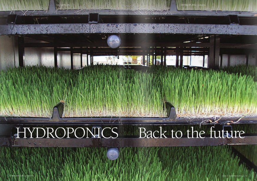 "From seed to feed in seven days Hydroponic grass involves growing green shoots indoors under climate control with irrigation, without any soil or other growing medium. The development of the cereal ""seed"" to a feed takes only 6-7 days. The cereal is germinated or sprouted in specially developed trays that are provided with automatically controlled water from overhead sprays, which keeps them moist but not waterlogged and supplies them with the necessary nutrients for growth. The air and water temperature is also strictly controlled within the growing chamber, allowing for optimal growth. Light is provided by a UV source and the growing units can be powered by electricity or alternatively for the environmentally conscious by solar energy. Hydroponic grass can be grown from a variety of cereal grains, the most common being barley or wheat. Oilseeds such as linseed or sunflower as well as lupins can be added to the mix to modify the oil and starch content of the resultant sprouting grass. In some systems, herbs have also been added for their potential benefit. The product offered to the horse consists of the green shoots and then a mat of the intertwined root structure of the grass. In terms of production, two pounds of cereal seed yields approximately 15-22 pounds of grass fodder, and one of the larger units can potentially produce one ton of fodder for use per day. As the grass mats are consumed, more Hydroponic grass is not a new concept but rather an old one that is enjoying a recent resurgence. Whereas I remember the rather small hydroponic grass mats being offered simply as a tempter or succulent to sick and recovering horses, today it offers a much greater contribution to the daily energy and nutrient intake of horses in training. WORDS: DR CatheRine Dunnett BSC, PhD, R.nutR PhOtOS: FODDeR SOLutiOnS NUTRITION trays are inoculated, allowing a constant supply of fodder mats on an ongoing basis. At first glance you may think that horses would just eat the green grass shoots; however, the reality is that they eat the shoots and roots, so the whole growing mat is consumed leaving no waste. Opportunity to reduce starch intake In fussy feeders, ""Dr Green"" can often be the key to maintaining appetite as the level of work goes up and the pressure is on. It is not really practical to use the hydroponic grass as a total replacement for forage due to its low dry matter and high water content. A very large number of mats would have to be fed to achieve the same dry matter intake from an average daily amount of hay or haylage. Feeding alongside hay or haylage, an additional source of forage, is realistic and can encourage better forage consumption overall in fussy eaters. Perhaps the bigger opportunity in racing, however, is to use the hydroponic grass mats to replace part of the concentrate feed. A single mat can be used to replace roughly 4-6 pounds of concentrate feed, maintaining overall energy intake but reducing the reliance on high starch cereal feeds. A reduction in high starch concentrate feed offers many potential health and welfare benefits. Hindgut health may be improved by reducing the exposure of the resident microflora to starch that has escaped digestion in the small intestine. A healthy hindgut also means that fiber is fermented more efficiently and the resident microflora are able to improve their synthesis of B vitamins. The reduced starch intake, coupled with more chewing and greater saliva production, brings potential benefits for gastric health and behavior. World class eventer Clayton Fredericks uses hydroponic grass successfully to replace the majority of his horses' concentrate feed and he is very pleased with the overall result. Simple more available nutrients The hydroponic grass mats like conventional grass have a low dry matter (about 20%) and high moisture content (about 80%), but despite this, feeding a single 15-17 pound mat makes a worthwhile contribution to the ration and also helps ensure continued hydration. The feed value of hydroponic grass largely depends on the nutritional content of the starting material, i.e. the un-sprouted seed or grain. Interestingly, the actual sprouting process can improve the nature of the nutrition provided. This is due to the presence of a number of enzymes in the seed, which are activated by watering, to help mobilize macronutrients like protein, starch, and oil, converting a proportion of them into simpler, more available, compounds. While this process provides readily available nutrients and a fuel source for sprouting, these simple nutrients can also be used by the horse. Cereal grains such as barley and wheat are high in starch and low in structural fiber. However, during the sprouting process the starch is mobilized to provide sugars to drive growth and so the resultant level of starch in the sprouted grass is lower. Conversely, the fiber content of the sprouted grass is increased compared to that in the original cereal grain. Some of the protein will also be mobilized into its constituent amino acids. NOPS – Naturally occurring prohibited substance While there are many potential benefits to the use of hydroponic grass in racing, there are also a few questions that need to be answered. Sprouting grain of various types can contain a substance known as hordenine. Hordenine or hydroxyphenylethyl dimethylamine is a plant alkaloid that has an action similar to that of adrenalin in that it stimulates the heart, constricts blood vessels, and dilates the airway bronchioles. As such, hordenine is considered to be a prohibited substance, in North America and around the world. Hordenine can be present occasionally in horse feed ingredients like barley and distillers grains, where some sprouting may have occurred. Many feed manufacturers will test ingredients or finished feed for hordenine as part of an analysis screen for NOPS (naturally occurring prohibited substances) prior to releasing product for sale. As hydroponic grass arises from sprouting cereal grains, particularly barley, the presence of hordenine is a potential risk for horses in training. However, despite the potential for contamination of feed with hordenine, there have been relatively few post-race positive results for hordenine in recent years. Ideally, further work would be undertaken to investigate this issue along with a dialogue with the relevant racing authorities. Another important factor for health and safety is that good quality clean seed is sourced and that a high degree of cleanliness during the production of hydroponic grass is achieved to prevent mold or bacterial growth, which could be a risk to horse health. Self-contained towable units produce up to a ton of grass daily The practical use of hydroponic grass is made much easier by the availability of commercial units for growing the mats on a small or large scale. These self contained often towable units are carefully climate controlled and offer both small and large training establishments the opportunity to be self sufficient in producing hydroponic grass. The smallest units on a daily basis can produce 55lbs of grass, while for a larger stable there are units that will provide about a ton of hydroponic grass mats per day, which could suit more than 100 horses. Hydroponic grass is effectively a live feed which may help to explain some of the often immeasurable benefits of ""Dr. Green"" for horses in training. Excessive consumption of high starch-containing cereal feeds will certainly have an impact on the health and welfare of these horses. Hydroponic grass as part of a balanced diet could help to redress this balance and contribute to realizing a more evolutionary normal feeding pattern, bringing benefits to horse health, welfare, and potentially performance."