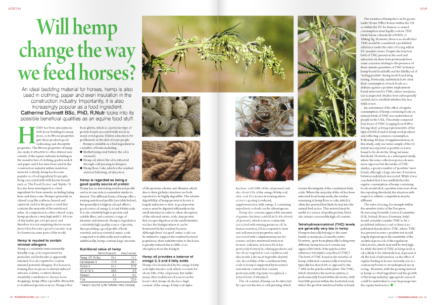 HEMP has been synonymous with horse bedding for many years, as its fibrous properties give these products good cushioning and absorptive properties. The fibrous properties of hemp also make it attractive to other diverse uses outside of the equine industry including in the manufacture of clothing, garden mulch and paper and it has even been used in the construction industry within insulation material. Latterly, hemp has become popular as a food ingredient for people, being associated with well-known brands such as 'The Food Doctor' and 'Ryvita.' It has also been investigated as a feed ingredient for farm animals, including laying hens and dairy cows. Hemp is primarily an oilseed crop like soybean, linseed and rapeseed, and it is the grain or seed that contains the majority of the nutritional value. In comparison to other oilseed crops, hemp produces a very high yield (~10 tons of dry matter per acre per year) and therefore it is not surprising that in recent years it has become a good economic crop for farmers in some parts of the world. Hemp is reputed to contain minimal allergens Hemp is a relatively environmentally friendly crop, as its requirement for pesticides and herbicides is apparently minimal. It is also reputed to contain minimal potential allergens. For horses in training that are prone to dietary-induced urticaria or hives, or where dietary sensitivity contributes to chronic loose droppings, hemp offers a possible alternative to traditional protein sources. Hemp is free 40 TRAINERMAGAZINE.com ISSUE 14 from gluten, which is a particular type of protein found associated with starch in many cereal grains. Gluten is known to be problematic in the diet of some people. Hemp is available as a feed ingredient in a number of forms including: ● Shelled hemp seed (where the oil is retained) ● Hemp oil, where the oil is extracted through cold pressing techniques ● Hemp flour/cake, which is the residual material following oil extraction Hemp is regarded as being a good quality source of protein Hemp has an interesting nutritional profile and in its raw state is somewhat similar to linseed. The different forms of hemp offer a varying nutritional profile (see table below), but generally it is high in oil and offers a good source of omega 3, 6 and 9 fatty acids. It is also relatively high in protein and soluble fiber, and contains a range of vitamins and minerals. Hemp is regarded as a relatively high-quality source of protein, thus providing a good profile of both essential and non-essential amino acids compared to traditionally used soybean. Additionally, hemp contains large amounts of the proteins edestin and albumin, which due to their globular structure are both reported to be highly digestible. The relative digestibility of hemp protein in horses is largely unknown to date. A good protein source must be digested efficiently in the small intestine in order to allow absorption of the released amino acids. Any protein that escapes digestion in the small intestine reaches the hindgut where it can be fermented by the resident bacteria. Although these 'escaped' amino acids can be utilized to support the resident bacterial population, their nutritive value to the horse is greatly reduced due to little or no absorption from the hindgut. Hemp oil provides a balance of omega 3, 6 and 9 fatty acids Hemp oil is dominated by the omega 6 fatty acid alpha-linoleic acid, which accounts for about 50% of the oil present, but unlike many other traditional oil sources in the horse's diet, hemp oil also has a high content of the omega 3 fatty acid alphaShelled Hempseeds Hemp flour/cake Energy (DE MJ/kg) 25.4 11.1 Carbohydrate % 47.0 50.7 Protein % 34.4 27.9 Oils & Fat % 50.6 8.9 Minerals 6.1 6.3 Fiber 7.6 22.0 * Analysis supplied by the Yorkshire Hemp Companylinolenic acid (20% of the oil present) and also about 15% of the omega 9 fatty acid oleic acid. For horses in training where access to grazing is reduced, supplementation with omega-3-containing ingredients or feeds can be advantageous. Hemp also contains appreciable amounts of gamma-linolenic acid GLA (1-4% of total oil present), which is more commonly associated with evening primrose oil. In human nutrition, GLA is reputed to have anti-inflammatory properties and is associated with complementary use for eczema and pre-menstrual tension in women. Likewise, in horses GLA has previously featured in calming products and also those targeted at coat condition and skin health. Like most vegetable-derived oils, the stability of the constituent fatty acids in hemp is supported by its natural antioxidant content that consists predominantly of gamma-tocopherol, a natural form of vitamin E. The oil content of hemp can be extracted by a process known as cold-pressing, which retains the integrity of the constituent fatty acids. Where the majority of the oil has been extracted from hemp seeds, the residue remaining is hemp flour or cake, which is often the material that finds its way into the animal feed sector. This material may be useful as a source of quality protein, but it also retains a reasonably high oil content. Tetrahydrocannabinol (THC) levels are generally very low in hemp Hemp technically belongs to the same family as marijuana, Cannabis sativa. However, apart from physically looking very different, hemp does not contain any appreciable levels of the psychoactive substance tetrahydrocannabinol (THC). The level of THC found in the varieties of hemp cultivated commercially is very low, typically less than 0.3% as opposed to the 7-20% in the psychoactive plant. The THC, which stimulates the nervous system, is predominantly found within the leaves, with very little present within the harvested seed, where the greatest nutritional value is found. The varieties of hemp that can be grown under Home Office license within the UK or within the EU for human or animal consumption must legally contain THC levels below a threshold of 0.02% or 200mg/kg. However, there is no doubt that THC would be considered a prohibited substance under the rules of racing within EU member states. Despite the very low level of THC present in the seed and extracted oil, there have previously been some concerns relating to the presence of these minute quantities of THC in human hemp-based foodstuffs and the likelihood of 'testing positive' during work-based drug testing. Previously, individuals have cited their consumption of such foods as a defense against a positive employmentbased urine test for THC, where marijuana use is suspected. Studies were subsequently carried out to establish whether this was valid or not. An assessment of the effect of regular consumption of hemp containing foods on urinary levels of THC was undertaken in people in the USA. This study compared four doses of THC (ranging from 0.09 to 0.6 mg/day) as being representative of the typical levels found in hemp seed products and reflecting common consumption. Following 10 days of supplementation, in this study, only one urine sample of the 15 tested was reported as positive as it was found to be above the 50 ng/ml urine threshold. However, in a subsequent study, where the urine collection protocols were more rigorous but the intake of THC similar, a greater number of 'positives' were found, although a large amount of variation between individuals was noted. While it was concluded that it was unlikely that the regular consumption of hemp-containing foods would elicit a positive urine test above the reporting threshold, the situation with respect to athletic competition may be different. The rules of racing, for example within the member states of the European Horseracing Scientific Liaison Committee (UK, Ireland, France, Germany, Italy) would certainly consider THC to be a prohibited substance and as there is no published threshold for THC, where THC was present in urine a positive test would largely depend upon the sensitivity of the analytical protocols of the regulatory laboratories, which may well be very high. So while the level of THC in hemp seed or oil is likely to be extremely low, if present at all, the lack of information on the effect of regular feeding in horses currently acts as a cautionary barrier to its widespread use in racing. However, with the growing interest in hemp as a feed ingredient and the growth of the hemp industry, appropriate research could be undertaken to ease its passage into the equine feed sector. ■