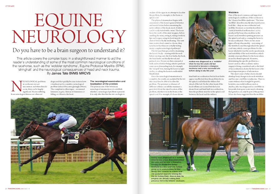 NEUROLOGICAL problems in racehorses are not uncommon and when they do occur, they can be hugely significant. Horses suffering from neurological disease are often not 20 TRAINERMAGAZINE.com ISSUE 14 diagnosed that quickly because trainers have a tendency not to consider a neurological problem unless it becomes glaringly obvious. The complaint is often vague – an unusual lameness or gait, a history of clumsiness or falling, or a blow to the head. The neurological examination and localization of the problem The primary aim of the veterinary neurological examination is to establish whether a neurological problem is present. It is only after this that the vet can begin to analyze all the signs in an attempt to localize the problem, for example, to the brain or spinal cord. The physical examination begins with assessment of the horse's general behavior and mental status before examining the nerve reflexes of the head, most of which can be easily tested with a mint. The horse hears the rustle of the mint wrapper, before smelling the mint, seeing it, taking it with its lips and tongue, using its facial muscle to chew it before finally swallowing. The next time readers feed a mint to a horse, they now know that they are actually testing many complex neurological pathways! The vet may then proceed to examining the horse's body – starting with the neck before moving onto the fore limbs, the back, the hind limbs and finally the tail and perineal area. Horses are then assessed at walk and trot before being asked to perform some more demanding tests, for example the 'tail-pull' test, turning the horse in tight circles, or asking the horse to walk whilst blindfolded. Once the neurological examination is complete, the results are analyzed by the vet who may then be able to localize the problem. The presence or absence of different reflexes can tell the examiner a great deal about the exact location of the problem, whether it is in the brain or the spinal cord. For example, if a horse shows hind limb incoordination but its front limbs appear unaffected, then the problem lies in the spinal cord behind the withers but ahead of the tail. On the other hand, if the head reflexes are normal but the horse shows front and hind limb incoordination, then the problem must lie in the spinal cord between the head and the withers. Wobblers One of the most common and important neurological conditions of the racehorse is the 'classical wobbler syndrome.' The term 'wobbler' describes exactly what such horses look like – they are uncoordinated and wobbly. It is more accurately described as 'cervical vertebral malformation' as it is produced by bony abnormalities in the horse's neck vertebrae putting pressure on the spinal cord and so causing the horse to be uncoordinated. There are two main types of bony abnormality – narrowing of the vertebral canal through which the spinal cord runs, which causes problems for the horse whichever way the neck is positioned, and instability of the neck vertebrae, which mainly causes problems for the horse when its neck is flexed upwards. However, determining the specific problem in a horse's neck is often academic unless surgery is being considered and so the level of incoordination shown by the horse is the most important piece of information. The exact cause of why a horse should develop bony changes in its neck vertebrae and become a wobbler is unknown. There is some evidence that it might be genetic, however, successful stallions such as Anabaa, who was diagnosed as a wobbler in his youth, have gone some way to showing that genetics can only be part of the picture. It has also been suggested that the wobbler syndrome develops as a result of a developmental bony disorder similar to osteochondritis dissecans (OCD). This does fit in well with the fact that wobblers are most commonly seen in fast growing male Thoroughbreds and that nutrition of the growing horse also seems to play a part. Essentially, the spinal cord is tightly held in a small bony canal formed by the horse's vertebrae and any tiny bony change to these vertebrae can put significant pressure on the spinal cord and hence cause incoordination. A fall or stumble almost always instigates the first veterinary examination and the appearance of a wobbler is quite characteristic. Flexion of the neck is often painful whereas back pain is unusual. Wobblers show equal incoordination on both sides and the hind legs are always affected while the front legs can be normal in some horses. Wobblers often show something called 'hypermetria,' which is also known as 'goose stepping,' where the horse over-flexes its leg, walking in an exaggerated way. Suspected wobblers are usually asked to perform some demanding tests, which are designed to highlight any incoordination. This often begins with asking the horse to turn in tight circles, where it may find it hard to place its feet correctly and often ends up standing on the other foot, stumbling and stopping in an abnormal position. Having assessed the horse turning, many will then ask the horse to reverse, which also shows off incoordination as moving backwards requires more coordination than moving forwards. The list of manipulative neurological tests is nearly endless but many of these are very useful when assessing a potential wobbler. For example, the 'tail-pull test' reveals hindlimb weakness, the 'hop test' reveals any front leg incoordination, and asking a wobbler to walk when holding its head up high can cause increased incoordination in horses with neck vertebrae instability. The incoordination of a wobbler can be graded using a number of different classifications, most of which vary from zero to five, with zero being normal and five being a severely uncoordinated horse that cannot stand let alone walk. This scale is useful for monitoring progress and for insurance purposes. Some insurance  policies do pay out if a horse is diagnosed as a wobbler of a certain grade, but as with most types of insurance, wobbler clauses are not always straightforward. Wobblers are usually diagnosed using a combination of clinical signs and x-rays. The neck is x-rayed and abnormalities are searched for that might explain the incoordination. It is usually possible to find small bony changes associated with some of the neck vertebrae and if so, this will be the most likely site of the spinal cord compression that is causing the incoordination. It is also possible to inject a dye into the spinal column that shows up brightly on x-ray – something that is known as a myelogram. When performed, this shows very clearly where any compression may be. However, this is not commonly carried out because it is a dangerous procedure for a number of reasons – the dye is an irritant, and any injection here is dangerous, with the uncoordinated horse then expected to get up smoothly after the anesthetic without injuring itself further. Unfortunately, little can be done to aid the recovery of a wobbler. Wobblers are often treated with long courses of antiinflammatories and rested for up to six months in the hope that the problem may settle. However, this is not straightforward as the horses often become very fresh. Another issue with wobblers is that even if they recover, how safe are they to ride? If their incoordination has been blamed on changes seen on neck x-rays, then the problem could recur. Neck surgery is sometimes attempted but success is far from guaranteed. All of these concerns and thoughts come together to make the diagnosis of a wobbler a damning one in so many cases, which makes the fairytale stories of Anabaa and Shamardal even more extraordinary. Equine Protozoal Myelitis (EPM) Some say that EPM is now the most common neurological disease affecting horses in the USA. The disease causes very similar signs to those shown by a wobbler but cases can have a considerably better outcome. The initial signs are often vague findings such as lethargy and horses knocking themselves at exercise but these may progress to obvious incoordination and weakness and sometimes severely affected horses cannot even stand. Although more common in young horses, the disease can affect horses of any age. In 1991 researchers found that EPM was caused by a small protozoal organism called Sarcocystis neurona, which is common in North and South America. The Sarcocystis lifecycle must involve its definitive host or carrier, the Virginia Possum, and for a horse to become infected it must ingest the Sarcocystis from possum feces when, for example, grazing in a field. The horse does not pass on Sarcocystis and so becomes infected with the organism, which targets its brain and spinal cord resulting in an uncoordinated horse. Several new studies, however, have shown that the exact cause of EPM is not as clearcut as it seemed. Uninfected horses were fed up to 60 million Sarcocystis neurona sporocysts from the feces of infected possums but the signs of EPM were not always seen. In essence, EPM continues to puzzle vets. Currently, it seems that there are two possibilities. Firstly, it is another species of Sarcocystis that causes EPM and not Sarcocystis neurona. Secondly, another factor or agent predisposes a horse to develop the disease. Nevertheless, it does appear to be fairly concrete that possums play a pivotal role in horses becoming infected with the disease and so horse owners are well advised to try and keep the two species separate. The task facing the vet is often to decide whether a particular horse has EPM or classical wobbler syndrome. The most common clinical differences are that horses with EPM often show forelimb incoordination and usually display more advanced signs on one side, whereas wobblers often show only hind limb incoordination and are usually equally affected on both sides. Confirmation of the diagnosis of EPM is not straightforward as a blood test only shows that a horse has come into contact with the disease (not necessarily become infected with it) and although a spinal fluid sample can confirm the disease, it is still possible to get false positive and false negative results. Recent extensive blood testing has revealed that over half the horses in areas with high rates of EPM, for example, the Midwest and Northeast, seem to have been exposed to Sarcocystis but only a small percentage develop neurological signs. Nevertheless, perhaps the biggest difference between EPM and the classical wobbler syndrome is that EPM is treatable in a large proportion of cases if therapy is initiated quickly. Several different types of anti-parasitic and anti-inflammatory drug have to be given to the horse for a long period of time, but a significant percentage of horses can recover and race successfully and only a small percentage have to be euthanized. There is also the possibility of a vaccine becoming available in the future. Stringhalt 'Stringhalt' is an involuntary, repetitive, exaggerated flexion reflex of the hock. As the horse walks, it flexes its hock in an exaggerated manner with every stride. Some horses have a mild form of the condition in which it is only noticeable at walk and has no effect on the horse's athletic ability. However, horses with a severe form of the condition can actually touch their belly with their hoof on every stride and the stringhalt can limit their athletic ability. Treatment is often ineffective but when the condition first becomes apparent, rest and anti-inflammatories are usually initiated to try and resolve the problem or at least limit its severity. There is a surgery in which a specific tendon is cut, which can abolish the condition in some horses but this is not often attempted unless the condition is preventing the horse from being an athlete. The stringhalt described above is often referred to as 'classical stringhalt' in order to differentiate it from 'Australian stringhalt,' which is seen in the southern hemisphere. Australian stringhalt causes affected horses to walk with the same strange gait described above but it often affects both hind legs. It is caused by the ingestion of plant toxins and so is usually found in several horses grazing on a specific pasture. Acute Head or Neck Trauma Horses bang their heads with alarming regularity; however, if a horse receives a blow of sufficient strength in a specific place, it can result in severe neurological consequences. When the neurological signs do not disappear immediately, the attending vet will perform a thorough neurological examination which attempts to localize the problem to a specific part of the brain, or at the very least to establish whether the problem is in the brain or the spinal cord. Head and neck x-rays are carried out and sometimes the cause becomes clear so the required treatment is obvious. However, more commonly, the x-rays show no significant abnormalities and then deciding upon a treatment plan difficult. For many years, both doctors and vets administered the strongest type of antiinflammatory at their disposal – the corticosteroids. However, new extensive research carried out in human patients has surprisingly revealed that not only do patients not seem to improve for the administration of corticosteroids but that these drugs actually seem to be potentially harmful. While some vets still give corticosteroids to horses who suffer from acute head or neck trauma, this human research has encouraged many of them not to use this type of drug. As a result, treatment now comprises of good management of the situation, for example, maintaining breathing, reducing swelling using other drugs, preventing secondary injury and good nursing. The prognosis for horses following head trauma and neurological signs is variable and highly unpredictable. Other neurological conditions There is a long list of equine neurological conditions but there are a few more that are worthy of mention particularly with regard to racehorses. Equine Herpesvirus (EHV-1) is best known for causing respiratory problems in horses or abortion in pregnant mares but it can also cause neurological disease. Treatment is not easy and hence many vaccinate against the disease. There are also a number of conditions that result from damage to specific nerves with perhaps the best example being 'Sweeney.' This condition results from damage to the suprascapular nerve that is usually caused by trauma, for example, a collision with another horse or a solid object such as a fence. The nerve damage then slowly leads to marked muscle loss of the shoulder, and a few months after the incident the amount of muscle loss can be quite alarming. Fortunately, the condition usually resolves with rest but the muscles often require up to eighteen months to regenerate.