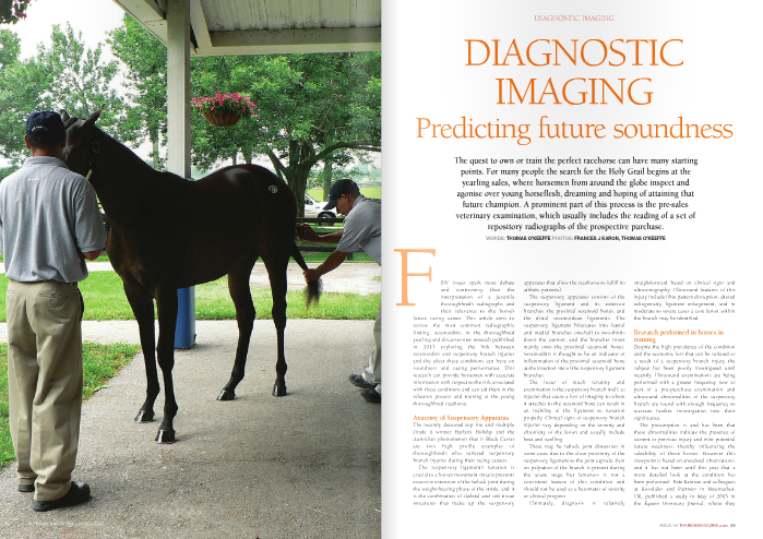 "DIAGNOSTIC IMAGING Predicting future soundness  The quest to own or train the perfect racehorse can have many starting points. For many people the search for the Holy Grail begins at the yearling sales, where horsemen from around the globe inspect and agonise over young horseflesh, dreaming and hoping of attaining that future champion. A prominent part of this process is the pre-sales veterinary examination, which usually includes the reading of a set of repository radiographs of the prospective purchase. EW issues spark more debate and controversy than the interpretation of a juvenile thoroughbred's radiographs and their relevance to the horse's  future racing career. This article aims to review the most common radiographic finding, sesamoiditis, in the thoroughbred yearling and discusses new research published in 2013 exploring the link between sesamoiditis and suspensory branch injuries and the effect these conditions can have on soundness and racing performance. This research can provide horsemen with accurate information with respect to the risk associated with these conditions and can aid them in the selection process and training of the young thoroughbred racehorse.  Anatomy of Suspensory Apparatus  The recently deceased top sire and multiple Grade 1 winner Harlan's Holiday and the Australian phenomenon that is Black Caviar are two high profile examples of thoroughbreds who suffered suspensory branch injuries during their racing careers.  The suspensory ligament's function is crucial to a horse's movement since it prevents excessive extension of the fetlock joint during the weight-bearing phase of the stride, and it is the combination of skeletal and soft tissue structures that make up the suspensory  apparatus that allow the racehorse to fulfill its athletic potential.  The suspensory apparatus consists of the suspensory ligament and its extensor branches, the proximal sesamoid bones, and the distal sesamoidean ligaments. The suspensory ligament bifurcates into lateral and medial branches one-half to two-thirds down the cannon, and the branches insert mainly onto the proximal sesamoid bones. Sesamoiditis is thought to be an indicator of inflammation of the proximal sesamoid bone at the insertion site of the suspensory ligament branches.  The focus of much scrutiny and examination is the suspensory branch itself, as injuries that cause a loss of integrity to where it attaches to the sesamoid bone can result in an inability of the ligament to function properly. Clinical signs of suspensory branch injuries vary depending on the severity and chronicity of the lesion and usually include heat and swelling.  There may be fetlock joint distension in some cases due to the close proximity of the suspensory ligament to the joint capsule. Pain on palpation of the branch is present during the acute stage but lameness is not a consistent feature of this condition and should not be used as a barometer of severity or clinical progress.  Ultimately, diagnosis is relatively  straightforward based on clinical signs and ultrasonography. Ultrasound features of this injury include fibre pattern disruption, altered echogenicity, ligament enlargement, and in moderate to severe cases a core lesion within the branch may be identified.  Research performed in horses in training Despite the high prevalence of the condition and the economic loss that can be suffered as a result of a suspensory branch injury, the subject has been poorly investigated until recently. Ultrasound examinations are being performed with a greater frequency now as part of a pre-purchase examination and ultrasound abnormalities of the suspensory branch are found with enough frequency to warrant further investigation into their significance.  The presumption is and has been that these abnormalities indicate the presence of current or previous injury and infer potential future weakness, thereby influencing the saleability of these horses. However this viewpoint is based on anecdotal observations, and it has not been until this year that a more detailed look at the condition has been performed. Pete Ramzan and colleagues at Rossdales and Partners in Newmarket, UK, published a study in May of 2013 in the Equine Veterinary Journal, where they of suspensory ligament branch injury in early racehorse training.  Plevin and McLellan reviewed pre-sales radiographs of 291 clinically normal yearling thoroughbreds and graded them for the presence of and/or the level of sesamoiditis present. Medical records for each of these horses during their first year of training were reviewed to identify cases of suspensory branch injury.  The objective was to evaluate the usefulness of radiologic grading of yearling sesamoiditis as a marker for subsequent suspensory branch injury, which would allow veterinarians to more accurately provide pre-purchase advice to their clients. All the horses in their study were trained at a single training centre in Florida and all suspected cases of suspensory branch injury as exhibited by clinical signs were confirmed with diagnostic ultrasound.  The study showed that yearlings with significant sesamoiditis at the time of the yearling sales are more likely to develop suspensory branch injury in the corresponding suspensory branch than those with mild or no sesamoiditis. In order to categorise it further, researchers proved that yearlings with severe sesamoiditis are five times more likely to develop clinical signs of suspensory branch injury within the first year of race training.  This information provides veterinarians with a grading scale for reading radiographs of yearling's sesamoid bones with which they can appropriately advise their clients when it comes to the pre-purchase examination. This should not be seen as a negative by consignors and breeders, as information and studies such as this allow veterinarians to advise clients with confidence of the statistically low risk of future injury of the majority of sales horses with low grade sesamoiditis.  Suspensory Branch Problems and Racing Performance  The second study performed by McLellan and Plevin explored the effect suspensory branch injury can have on racing performance, including number of starts, interval to first race, career earnings, and ""speed figures"" and compared to a control group. Records were reviewed of 896 horses in training, with horses who suffered an injury of the suspensory branch between September of their yearling year and May of their two- year-old year were identified.  These horses' race records were compared against their cohorts in the training group who served as the control group. All case horses were managed with stall rest and a controlled increasing exercise program with sequential ultrasound examinations and physical examinations every 30 days during their rehabilitation period. Racing data from this study was obtained from the Equibase website, and the average Equibase ""speed figure"" was used as a measure of performance.  completed ultrasounds on sixty racehorses in training known to be free of history and clinical signs of suspensory branch injury or proximal sesamoid injury, in a bid to quantify the prevalence of the condition subclinically in a cohort of horses in training.  The study revealed that nearly 7% of the horses were found to have what would be considered moderate ultrasound abnormalities, with no history of clinical suspensory branch injury. These are findings significant enough to preclude the horses from being permanently imported into Hong Kong for racing or to negatively impact acceptability to purchaser regardless of destination, yet these horses had no clinical signs and have been in full training up until the time of the ultrasound examination. This study highlights the need for further research into the suspensory branch in racehorses to determine whether these abnormalities are predictive for future clinical injury.  Sesamoiditis and Suspensory Branch Desmitis Following the same theme in the US, Sarah Plevin and Jonathan McLellan of Florida Equine Veterinary Associates in Ocala have done extensive research on sesamoiditis and suspensory branch injuries and had two studies published in the Equine Veterinary Journal in August 2013. The first looked at the relationship between the radiographic signs of sesamoiditis in yearlings and whether they predispose these young horses to suspensory branch injury in their future racing careers. Sesamoiditis has always been believed to be associated with injury to the suspensory branch attachment, however no study has investigated the relationship between yearling sesamoiditis and the subsequent development  In the study, 9.5% of the horses were found to have suspensory branch injury, a figure that correlates well with previous research. The left front inside suspensory branch was found to be most commonly affected, which may be as a result of either the counterclockwise training routine customary in North America placing an increased stress on this branch or other factors such as individual horse conformation, track surface, etc. Horses who suffered suspensory branch injury before May of their two-year-old year were significantly less likely to reach the racetrack than their contemporaries.  Only two-thirds of the case horses made the racetrack by the end of their three-year- old season, compared to nearly 90% of the control group. Less than a third of the case horses started a race as a two-year-old, compared to over 60% of the control group. Also, McLellan and Plevin proved statistically that horses suffering from suspensory branch injuries have a significant increase in the  number of days taken to achieve their first start.  It was, however, demonstrated during the review of the data that the comparison of the speed figures of horses with previous suspensory injury and those that were free of the problem did not yield a difference, suggesting that horses with this type of injury who actually race successfully have a similar performance level to their matched controls.  The other interesting conclusions from the study were that severe injuries to the suspensory branch had a 50% chance likelihood of reccurrence and that sesamoid bone abnormalities noted during the examination of the medical records coincided with a more severe suspensory branch injury and reduced racing performance.  Discussion  The equine thoroughbred suspensory apparatus is arguably the most biomechanically stressed part of the thoroughbred's anatomy and managing and treating suspensory branch injuries remains one of the most challenging problems that trainers and veterinarians encounter today. This places an even greater emphasis on accurate diagnostic imaging not only in its traditional guise as a diagnostic tool in the face of an injury but also as an aid in predicting which horses may suffer from the condition in the future  The three studies mentioned above demonstrate that injury to the suspensory branch is a serious career-limiting injury and reiterate how the anatomical relationship between sesamoid bone and suspensory ligament means that often, bone and soft tissue injuries occur simultaneously. The studies show that a very large percentage of young thoroughbreds have, on radiographic examination, what would be considered strictly by textbook definition an ""abnormal"" sesamoid. However, the conclusion from should not be that any young horse with an abnormal sesamoid must be avoided; rather, that we now have an accurate grading system for sesamoiditis in yearlings that can aid veterinarians in predicting the likelihood of that horse developing a suspensory branch injury.  The grading system should allow for less yearlings to be criticised for having sesamoiditis at sales, increasing their prospects of finding a buyer and allowing those that are found to have significant sesamoiditis, and consequently high-risk candidates for a suspensory problem, to be managed and trained in the appropriate fashion for optimum chance of making the racetrack. This is especially relevant when the studies proved that individual cases with suspensory branch injury who make it to the racetrack achieve comparable speed figures with respect to their contemporaries, showing them to have no difference in racing ability. The high prevalence of both sesamoiditis and suspensory branch injury in young thoroughbreds highlights the need for caution and more research into the area for a greater understanding of the significance of these findings and to prevent their over- interpretation.  Unfortunately, despite the many options available to the trainer and veterinarian for the treatment of suspensory branch injury, this is definitely one scenario where prevention is better than cure and why regular diagnostic imaging, coupled with a symbiotic relationship between trainer and veterinarian in the management of subclinical cases, should lead to the best outcome for all concerned. As a result of the dedication of veterinarians on both sides of the Atlantic Ocean, our understanding of this troublesome condition has grown exponentially over the past twelve months and in the interests of horsemen and their racehorses, long may this continue to be the case."