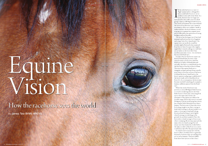 IN the wild, the horse is a 'prey' or 'flight' animal and so is designed to have a wide field of vision to see its predators early and outrun them. As a result, the horse has two large eyes each placed on the widest part of its head giving it almost a 360-degree field of vision. This article will examine the science behind the vision of our favourite 'prey' animal in an attempt to allow our 'predator' minds to understand how the horse behaves, as well as going on to examine how equine vision may be affected by the application of racing headgear and eye disorders. The horse has the largest eye of any land mammal and each eye has lots of pigment and a large 'letter-box' shaped pupil. The equine eye is not perfectly round but actually slightly flattened when examined from front to back. Its upper lid is slightly angled due to muscle pulling on it and there are no lashes on the lower lids. It has excellent panoramic vision – low resolution but very little blind-spot. It seems obvious that horses cannot see directly behind them; however, what surprises many is firstly, how small the blind-spot actually is behind them and secondly, that there is a small blind-spot for the first three or four feet in front of them. The area of the equine blind-spot is triangular in shape and runs from a specific point three to four feet in front of the horse to behind the horse's head, back to the horse's quarters and going on indefinitely if the horse stands with its head directly in front of it. As a consequence, the horse may become startled if something, for example a human, suddenly appears from the blind- spot. Whilst the result of the horse's eye position is a near 360-degree field of vision, it is worth considering that not all of this field of vision is binocular (seen using both eyes at the same time). In fact, the placement of the equine eye reduces the possible range of binocular vision to around 65 degrees with the result being that a horse has a smaller field of detailed vision than a human. The horse uses its binocular vision by looking straight at an object, raising its head when looking at a distant predator or a jump, or lowering its head and looking downward and arching its neck slightly when focussing on something on the ground. An excellent example of how the horse alters is head-carriage to focus on an object is jumping. Horses may approach the jump with a low head carriage but will always raise their head a few strides before the jump in order to fully focus on it, assess it and hence take off at the appropriate time. It is hard to know exactly how well the horse is able to see detail, but it is generally believed to be better than cats and dogs but not as well as humans. The horse differs from these three species in that it has  a 'visual streak', which is a linear area within the retina (at the back of the eye) with a high concentration of the cells which provide visual detail for the horse. Hence, horses see greater detail when the object they are looking at falls in this region and so they will often tilt, raise or lower their head to place the object within the area of the visual streak. As a prey animal, the horse is naturally very sensitive to motion as movement is usually the first alert that a predator is approaching, and the area of the horse's retina outside the visual streak is where motion is most readily detected. The wide field of peripheral monocular vision (seen using one eye) may have relatively poor visual detail but motion is easily detected here and hence horses will act defensively and run if something suddenly moves into their peripheral field of vision, as they have sensed the movement but often not actually obtained a detailed view of what they have noticed. It is only after this instinctive, defensive response that the horse may choose to turn to face the object and switch from monocular vision to binocular vision in order to closely assess it. This may help one or two readers understand why their horse has shied at a bird yards away – reaction to movement in the periphery of the equine field of vision is a completely natural thing for a horse to do. There is a common belief that horses can only see black and white, but as anyone who has had their horse shy at a brightly coloured object will know, this is not the case. Although we cannot know for sure, both the anatomy of the equine eye and the results of several studies have given us an idea of how much colour the horse can see. The colour-sensing process is the same amongst all mammals – there are two types of photo-receptors: rods, which are responsible for seeing in dark conditions; and cones, which are sensitive to colour and of which the horse has less than a human. The difference between colour perception seems to be that horses have dichromatic vision and humans have trichromic vision - in other words, they can see two primary colours and we can see three primary colours. There is much controversy as to which colours the horse can see but research carried out at the Medical College of Wisconsin on the neurological response of the eyes of anaesthetised horses suggests that horses can see blue and green, but not red. Indeed, many have likened their colour perception to that of humans with red-green colour blindness. There is, however, some suggestion that there may be more cones in the visual streak and hence the horse may not only receive more visual detail when objects fall in this area of the retina but also greater colour perception, something that does fit in with the horse's behaviour. The anatomy of the equine eye also makes a horse's vision different to a human's with regard to light. As horses generally have a higher proportion of rods to cones than humans, as well as a tapetum lucidum (reflective layer at the back of the eye), the horse has superior night vision and improved vision on cloudy days. However, the side effect of this is that they also have inferior vision on bright, sunny days and are less able to adjust quickly to changes of light. This should be taken into account when, for example, positioning jumps in the shade. I am sure that many flat racing enthusiasts on both sides of the pond remember Dayjur throwing away the 1990 Breeders' Cup Sprint in dramatic style by jumping the shadow just before the winning post. If only he had less rods and no tapetum lucidum then I am sure he would not have found the shadow so frightening and would have had the Breeders' Cup Sprint on his resume as he deserved. Having discussed in detail how the horse sees the world, it follows that the effect of racing headgear should now be analysed. Firstly, the most common piece of headgear should be considered – blinkers. Applying the theory of equine vision, it appears that by putting blinkers on what we are doing is forcing the horse to use its 65 degrees of binocular vision and allowing it very little in the way of peripheral monocular vision. The application of blinkers to 1999 Cheltenham Gold Cup winner See More Business certainly seemed to help him concentrate on the task in hand as he won his Gold Cup in first-time blinkers and his form never really looked back after their introduction. It should also be mentioned that some consider that the 'shock' of putting blinkers on can sometimes improve a horse's form temporarily. If this is the case, then it may be due to the fear of a prey animal which has suddenly had the bulk of its peripheral vision removed and hence could theoretically 'run scared' perhaps until it realises that there is no need? A visor is a pair of blinkers modified with a slit at the back of both blinkers. Theoretically, this should suit a front- runner who performs better when made to use its binocular vision to concentrate on the race but who will also do better again when allowed a glimpse of horses attempting to pass by means of the slits allowing a small amount of peripheral monocular vision behind. Some trainers alternate horses between blinkers and a visor in an attempt to keep the effect of the headgear but the theory behind this is questionable. There are horses who do not respond well to having the majority of their peripheral vision removed by either a pair of blinkers or a visor and this is where sheepskin cheek-pieces have come in. On 5th January 2000, Flying Bold won a selling hurdle at Catterick for Len Lungo. The newsworthy nature of this event was because he was the first winner in Great Britain to be wearing a pair of sheepskin cheek-pieces. Since then, they have become widely used despite the fact that they only remove a small percentage of the horse's monocular peripheral vision. In some cases, this small alteration to a horse's field of vision can significantly improve a horse's performance as shown by the 2008/2009 form of Hennessy Gold Cup, Levy Board Chase and Totesport Bowl winner Madison Du Berlais. Another topical piece of headgear that affects the vision of the racehorse is the sheepskin noseband or 'shadow roll' as it is referred to in North America. The simple aim of this piece of equipment is to force the horse to lower its head otherwise the thick noseband stops the horse seeing in front at all. It is desirable for a horse to lower its head for many reasons but two stand out as being more important than the others. Firstly, to make a jumping horse look down at the obstacle in order to measure it accurately and secondly, because horses do not seem to 'lengthen' and gallop to full extension if they have their head stuck in the air like a giraffe. The 2009 Cheltenham Festival has seen the sheepskin noseband come to prominence like never before courtesy of the high- profile victories of the Paul Nicholls' duo Big Bucks and Kauto Star. Interestingly, both were wearing a new, streamlined version of the fluffy noseband called a 'Maveband'. The final and perhaps most interesting piece of headgear to be discussed is the eyeshield or 'pacifier'. This piece of equipment has been used successfully all over the world, for example, by the talented stayer but notorious rogue Bulwark. At first glance, the tack looks bordering on the ridiculous, however then our knowledge of equine vision is considered. Being a prey animal, the horse is particularly sensitive to movement and its natural instinct is to run from such a stimulus but a racehorse can ill afford to lose such nervous energy. The racecourse with its large crowd, extensive facilities and white railings, not to mention the possibility of a large field of animals racing, presents the horse with a huge amount of moving stimuli, and some horses simply lose race after race through wasting nervous energy reacting to every movement happening around them. The eyeshield or 'pacifier' does exactly what it claims – it shields the eye from some of the stimuli and calms some horses. However, it should be pointed out that eyeshields are not suitable for racing when large amounts of kickback are expected, for example in dirt racing, as the equipment can become clogged and the horse's vision blocked. The final subject that shall be discussed is the effect of eye disorders on vision. The equine eye is a delicate structure and it goes without saying that problems here must be treated before permanent damage is done. It would be impossible to list every eye condition that can affect vision so what shall be considered instead is the effect of scars left from eye disorders. Sometimes a small corneal ulcer can heal leaving a tiny white scar on the eye that plainly has very little impact on the horse's vision. However, other horses can be left with large scars that affect the way in which they behave. It is easy to say that a scar does not cover all the eye so the horse will be able to see enough, but what should be analysed is the area of the eye which has been compromised and how exactly that individual's vision will be affected. Horses with large eye scars are often seen lifting and tilting their heads presumably to try and get an object into their visual streak as best they can. Nevertheless, if the horse wants to race enough, it is amazing how well horses with large visual impairments can perform, as shown by the recent successes of the mare Material World over hurdles and the filly Barshiba on the flat, both of whom have only one functioning eye. In summary, an understanding of equine vision is crucial in our interactions with horses as well as when deciding on the application of racing headgear. Everybody knows that you should not approach a horse from behind and that horses shy at birds but the theory of how horses see the world simply reinforces the reasons why. This knowledge can then be applied to understanding why certain pieces of headgear work on some horses but not on others and perhaps give the reader a little food for thought when deciding what to declare on their next runner.