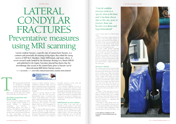 THIS important study which builds on a programme of orthopaedic research developed by the HBLB over the last two decades has provided much needed evidence to underpin the interpretation of     MRI images and may help trainers identify horses at risk before a full fracture occurs.     The HBLB's Liverpool bone and fracture studies   One of the Horserace Betting Levy Board's five key strategic research priorities is to improve methods of identification, management, and prevention of musculoskeletal disease and injury in racehorses. The HBLB has recently launched website at rachorsehealth.hblb.org.uk to provide trainers with up-to-date information on their wide-ranging research on Thoroughbred health and disease. Although     research on equine veterinary science is conducted in numerous centres across the globe, a substantial amount of the information about racing injuries has been collected in the UK as a direct result of research funding from the HBLB.     Data on racecourse fatalities has been collected in the UK since the 1970s. Musculoskeletal injuries, in particular bone fractures, are the leading causes of racecourse death. To better understand the causes of these injuries, two large consecutive studies were performed at the University of Liverpool between 1998 and 2003 investigating risk factors for fatal distal limb fractures during racing.     This involved incredible logistical challenges and the cooperation of large numbers of racecourse vets and staff together with trainers and owners. But it proved to be an extremely wor thwhile collaborative effort leading to     invaluable conclusions on the causes and prevention of racing injuries.     The researchers identified all cases of fractures occurring at UK racecourses in this period and collected bone samples from both the affected and unaffected opposite limbs for further analysis. The studies not only provided a wealth of information on racing injures at the time but also an archive of specimens was created and is still being used for cutting edge research today.     Which fractures are most common?     Flat turf racing is the safest with an estimated 0.4 fatal fractures for every 1,000 starts while National Hunt Flat racing has been associated with the highest risk for fatal fracture at a rate of 2.2 per 1,000 starts. Lateral condylar fracture is the most common type overall, accounting for 45% of all fatal limb fractures in the UK and this is the most     common fracture type across National Hunt racing.     In Flat racing, lateral condylar fractures are also all too common but pastern fractures on turf and proximal sesamoid bone fractures on all weather surfaces are more prevalent. The exact reasons why different racing formats, surfaces, and distances lead to different forms of fracture are still being teased apart.     For lateral condylar fractures specifically, risk factors include a lack of fast work, first year of training, and racing first as three- or four-year-olds compared to two-year-olds. When the circumstances of the race in which the lateral condylar fracture occurs have been examined, firm going, longer distances, larger fields, and taking part in amateur jockey races have all been linked to a higher prevalence of this fracture type.     Precursors to fracture     The condyles are the round prominences at the end of a bone that form part of the joint with the adjacent bone. In the cannon bones, there are two condyles, one on either side and thus they are named the lateral (outer) and medial (inner) condyles. Both lateral and medial condylar factures can occur and they can affect both the fore and hind limbs. Lateral condylar fractures form in a specific area of the bone and it has been shown that in this site, prior to fracture, bone can become very dense and hypermineralised. As a result, calcium crystals are deposited in the bone and there is a loss of collagen.     Collagen is a key component of bone and other tissues that provides bendiness and the ability to withstand impact. Loss of collagen and build-up of dense and brittle tissue puts this area of the bone at risk of fracture. In some horses the fracture is so catastrophic that euthanasia is necessary.    Fortunately, in many affected horses, the fractures can be repaired by placing screws across the fracture line either under anaesthesia or, for the least complex configurations, under standing sedation (see Stand and deliver – A    important step forwards in equine fracture repair:   European Trainer Issue 39  ). Nevertheless, even in the least severe cases, lateral condylar fractures can be career threatening.     Equine MRI     MRI, or more correctly magnetic resonance imaging, is an imaging technique with important differences from traditional x-ray. MRI does not use radiation but rather a strong magnet aligned with the body that causes atoms within the body's cells to move subtly, and this change in orientation of the atoms is detected by the scanner and analysed to create a two-dimensional image as though the body was being cut into slices. From one scan, multiple images are reconstructed to show both the long and short axes of the region under examination and multiple very fine slices are created. In this way, MRI reveals incredible detail of the internal structure of bone and soft tissues.     For humans, an MRI study generally involves a session in a claustrophobia-inducing tunnel-shaped machine. This sort of MRI equipment can be used in horses but requires a general anaesthetic. The development of open magnets that can be fitted around the lower limbs of a horse has brought MRI technology into the hands of equine veterinarians, and the technique can now be performed very easily in the standing horse, albeit usually with the aid of sedative drugs.     MRI and lateral condylar fractures     The MRI study on lateral condylar fractures was performed by an international consortium of researchers from UK Veterinary Schools in Glasgow and Liverpool, Newmarket's Animal     Health Trust, and scientists from Colorado State University. Using archived material collected previously on UK racecourses during the HBLB Liverpool Bone and Fracture study, Dr Tim Parkin of the University of Glasgow coordinated the research team.     The objectives were twofold: firstly the features of bone shape and internal structure in cannon bones from horses that had fractured in a race were compared to normal cannon bones from racehorses that died for other unrelated reasons. Secondly, the researchers sought to determine if there were inherent differences in the affected and unaffected bones, predisposing the bone to fracture, which could be measured in the living horse and used as a marker to 'flag up' any individual horse at being at risk of fracture.     The results proved to be extremely important. By comparing normal cannon bones with fractured cannon bones and cannon bones from the horses' uninjured opposite limbs, it was established that areas of super-dense bone were forming in the cannon bones prior to the occurrence of fracture. These areas of microdamage were often triangular in shape and when fractures occurred these typically ran across the triangles of brittle bone.     Carolyne Tranquille, author of the recent report in Equine Veterinary Journal, concluded that MRI is able to detect cartilage and bone changes associated with lateral condylar fractures and that the results of the study might in future allow at-risk horses to be identified. There were some important caveats: the bones were examined after death and in some cases had been in storage for some time. The storage process might have enhanced the changes     visible with MRI. Also, the study provided a simple snapshot in time and, by its nature, could not demonstrate the pathway of progression of microdamage towards catastrophic fracture. Finally, although the largest of its kind, the study involved only 49 horses with fractures and much more work is needed to fully understand how the cannon bone can become weakened and remodelled and more importantly, how this process can be arrested to reduce the risk of fracture in racehorses.     Can this study help racehorses today?   Some, but not all, horses that sustain a lateral condylar fracture will have episodes of detectable unsoundness prior to fracture. Tranquille and Parkin's HBLB-funded study shows that in individuals in which lameness can be localised to the fetlock and lower cannon bone region, consideration should be given to adding MRI to the conventional investigations such as fetlock x-rays that are used routinely in equine veterinary practice today. MRI is available at numerous specialist centres and there is no doubt that it has shown great potential for early diagnosis of bone and soft tissue conditions in horses.     It is important to note, however, that although lateral condylar fractures are common they are by no means the only form of fracture that racehorses suffer, and for some horses in which incipient fracture is suspected a more comprehensive whole body scintigraphic (see Nuclear Scanning – avoiding catastrophe!   European Trainer Issue 22  ) bone scan is more appropriate.