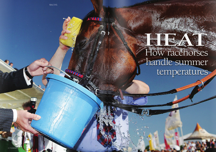 "Although it can be safe to run in the heat, high temperatures combined with high humidity can have profound effects on a thoroughbred's performance and health.     hang on your wall? The intense heat and humidity the day Big Red Mike won the 151st Queen's Plate at Woodbine Racetrack in Canada is why there is no ""official win photo"" taken by photographer    than 1,000 races, still recalls that day in 2010.     ""It was 100 degrees in the shade. We had the Queen [Queen Elizabeth II] and a big crowd. Mike is a very excitable horse, so it was stressful even before the race began,"" says Gonzalez, who trains primarily out of Woodbine and Fort Erie with his assistant, wife Martha.     Big Red Mike led the mile and a quarter race from gate to wire. Afterwards, ""Mike ended up galloping out for about twice as long as usual,"" adds Gonzalez.     This is because immediately after the race, jockey Eurico Da Silva was interviewed for live television coverage while still on Big Red Mike, which is fairly typical for this type of marquee event.     When Mike and Da Silva finally reached Gonzalez after the interview, the trainer recalls, ""I could see he was in trouble right away.""     Recognizing the signs of heat stroke, Gonzalez immediately began cooling off Big Red Mike.     ""Woodbine has (cold) water hoses strategically placed about every eighth of a mile, so we walked him and stopped to hose him all the way (to the winner's circle). The Queen was there, waiting along with 1,000 other people in the winner's circle. I felt bad making them wait, but....""     Despite cold hosing, Big Red Mike became extremely agitated in the winner's circle and, in Martha Gonzalez' words, ""was looking to go down."" Hence the abrupt ending to the celebrations and win photo ceremony. The Gonzalez duo unceremoniously ripped the flowers from Big Red Mike to get him back under the cold water.     Similar weather conditions occur at most of the major North American thoroughbred tracks in the summer months as experienced by Big Red Mike the day of the Plate. By mid-July, Belmont Park in New York will be a stifling 28°C with 75% humidity, whereas Calder racecourse and Gulfstream Park in Florida and Del Mar and Hollywood Park in California will all be upward of 32°C and 85% humidity. Under these conditions, intensely exercising horses are at risk for heat stroke, which is defined as a persistent increase in the core body temperature above 41.5°C in combination with decreased sweating.     Heat stroke most commonly occurs in thoroughbreds training or racing in humid environments. To avoid heat stroke, the horses need to be hydrated, fit, acclimatised to the heat and humidity, and carefully monitored both during and after racing/ training to ensure they do not develop heat- related disorders. How do thoroughbreds handle training and racing in the hot summer months and what can trainers do if their horses overheat?     The heat is on     When racing and training, a thoroughbred's     massive muscle mass generates extremely large amounts of heat.     ""Although some of this heat is retained and can actually improve function of active muscle, the so-called benefits of 'warming up,' more than 90% of the heat generated must be swiftly released from their bodies to limit the rise in internal body temperature,"" says Hal Schott II, MS, DVM, PhD, Dipl. ACVIM from Michigan State University's College of Veterinary Medicine. Schott is an expert in fluid and electrolyte balancing in athletic horses. ""If a horse cannot dissipate this heat, muscle and body temperatures can rise to critical levels and health-related sequelae can quickly develop, some of which can be life- threatening.     ""The heat can be a big problem, especially in places like Florida in the summer,"" adds Bruce Solomon, DVM, a racetrack veterinarian at Calder.     How horses normally handle heat     Typically, a horse's normal core (internal) body temperature is approximately 38°C. During intense exercise in extremely hot, humid conditions, core temperature can rise to 42oC within only a couple of minutes of maximal exertion.     ""This heat load must be dissipated rapidly to prevent development of heat-related problems,"" emphasises Schott.     The main way that horses dissipate heat is through sweating.     ""The rush of airflow along the body helps     sweat evaporate while running, but the efficiency of evaporative cooling diminishes considerably when horses are asked to stand still shortly after exercise, especially when humidity is high,"" notes Schott. ""Further, in comparison to their human counterparts, horses have approximately 50% less body surface area (per unit of body weight) from which to sweat and dissipate heat.""     ""Woodbine has water hoses strategically placed about every eighth of a mile, so we walked him and stopped to hose him""     Nick Gonzalez     This means that it is harder for horses to sweat to control internal body temperature (a process called thermoregulation) compared to humans. Considering how tough it can be for trainers, owners, jocks, lads, and others on the track to cool themselves off on hot summer days, you can image how an intensely exercising thoroughbred must feel.     In addition to sweat production, effective thermoregulation also requires an increase in blood flow to the skin. During exercise, the     brain ""senses"" an increase in body temperature as the temperature of blood going to the brain increases to values approaching 42oC. Through the nervous system, the brain then signals the blood vessels supplying the skin to dilate, which increase the flow of blood to the skin. Blood flowing close to the skin's surface is subsequently cooled by evaporation of sweat and cooler blood returns to the heart where it is pumped to and cools the rest of the body.     ""Increasing blood flow to the skin accounts for approximately 60–65% of heat loss in horses,"" says Schott. The remaining heat load is either stored in the body (10% or less) or lost through increased ventilation (about 25%).     According to Schott, ""The latter heat loss (from the lungs) is actually another form of evaporative cooling in the respiratory tract as a consequence of full humidification of inspired air.""     When things get too hot     When the ambient humidity is high, water cannot evaporate as efficiently from either the skin or the respiratory tract, which effectively impairs heat loss.     If a horse's body temperature gets too high during exercise or continues to increase after exercise, horses can appear weak and disoriented; have shallow and rapid breathing (panting); and may develop muscle tremors or spasms. If the cause of these problems is not identified quickly enough, a horse with heat     1. Hydration and Electrolyte Supplementation   Hydration is a key way to protect a thoroughbred from the heat. Because sweating is important for horses to help keep their body temperatures down during and after exercise, large volumes of electrolytes (like sodium, chloride, and potassium) are lost in the sweat (largely after the exercise bout is already over).     Gonzalez adds, ""We've got two water buckets in every stall that are refreshed throughout the day. Like other trainers, I use a complete feed, but I still add electrolytes to the feed. If a horse needs it, we also add electrolytes to the water.""     Solomon concurs and says, ""The better hydrated the horse is, the better they deal with the heat.""     Hydration is particularly important for horses racing on Salix (Lasix), which can dehydrate the horses even before they get to the starting gate.     ""We (veterinarians) have worked hard over the past ten years or so to get trainers to not draw the water before a race. Having free access to water at all times definitely helps horses stay hydrated,"" Solomon says.     2. Rations and Supplementation     The diet of a racehorse can also be altered to help horses handle heat and humidity. Diets that are lower in protein and higher in fat are better for exercising horses, but these rations need to be carefully balanced to ensure no deficiencies in amino acids (the building blocks of proteins) or roughage exist.     stroke can potentially collapse, appear to be having a seizure, or even die.     Because an exercising thoroughbred continues to produce a great deal of heat even after coming off the track, heat exhaustion and heat stroke can develop even after exercising has ceased, when they are still cooling out, which is what appears to have happened to Big Red Mike. This is particularly true if the horse is cooling out in areas that are poorly ventilated or in direct sunlight. Thus, signs of heat exhaustion/stroke may develop either soon after training or racing or even while being cooled out.     Risk factors for heat-related issues     There are a number of factors that experts believe contribute to heat-related health problems. For example, poor physical conditioning, lack of heat acclimatisation (adaptation to the heat), dehydration, electrolyte imbalances, and in the US, the use of diuretics prior to performing are all thought to contribute to exercise-related heat illnesses.     ""Fit racehorses that train in hot, humid conditions are better able to pump the blood to the skin to permit sweating and heat loss, begin sweating at body temperatures that are lower than an unfit horse, and have an improved 'thermal tolerance' during exercise,"" explains Schott.     Having a horse properly trained and ""fit"" for a race is not typically a problem, but having a horse acclimatised to racing in the heat can be significantly more challenging.     ""There are actually two strategies for horses that will be racing in the heat,"" says Solomon.     ""Some trainers forget about acclimatising them and bring the horses in as close to the race as possible... a 'get in, get out with no harm done' approach. Others bring them in 2- 3 weeks early, and let them acclimatise to the heat. There is great variation in which technique works, and you can't predict which horses will respond to which strategy.""     Cooling strategies after training/racing   Although traditional routines for cooling out horses don't change with the seasons, most trainers are extra observant of how their horses cool out in the summer.     ""If a horse has an increased respiratory rate and an anxious look in their eye, the trainers take some extra time to cool them out. They are sure to get cool water on their heads and bodies, bathe them in alcohol, make sure their temperatures come down, and get them in front of the fans,"" Solomon explains     ""Sometimes the trainers will even ice pack the carotid artery.""     For horses that trainers know are less able to handle the heat compared to other horses, Solomon recommends taking the time to make sure they are sufficiently cooled out, even if it means walking them for far longer than usual.     The same strategies apply following a win, but as Gonzalez recognizes, properly cooling out the winners can be more challenging than after a regular training session when they may have to stand still under bright sunshine in the winner's circle.     Gonzalez says, ""(After a race) you're kind of restricted because if you have to go to the test barn you have to follow protocol once you're in there. Nonetheless, first and foremost, you have to get them some fresh, cold water. If you see if they are getting wobbly, you get the water on the head and neck as best you can before you can get back     to your own barn and get the monster fan on them.""     Respect the heat     Both Gonazlez and Solomon recommend using common sense in the heat and taking the same precautions we would for ourselves if we over do it on a hot summer day. Most importantly, keep the horses hydrated. If your horse gets overheated, follow these steps:     l   Move the horse out of the sun, to an area with good airflow (a breeze or large fans);   l   Immediately apply cool water to the whole     body using a hose or bucket then scrape off     the water;   l   Continue ""active cooling"" until the rectal     temperature falls below 39.5°C; and   l   Contact your veterinarian to examine any horse that has had emergency cooling or who continues to appear distressed even     after cooling."