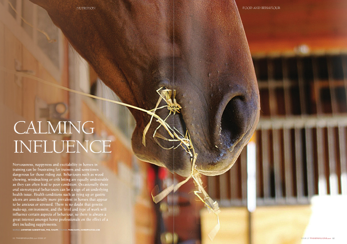 THERE is an enormous amount written about the link between feeding and behaviour, and the 'calming supplement' market is sizeable. However, there is in fact very little direct research in horses that investigates how diet impacts on behaviour if at all. One of the most basic ideas to consider is whether the anecdotal practice of placing horses that can be excitable or even unruly, such as those in pre-training, on a low energy, high fibre, low starch diet. Certainly the amount of energy fed per day, irrespective of the energy source, is thought to affect behaviour in some horses. When an excess of concentrate feed is fed in horses that are confined for a large part of the day or where exercise is light, horses may pile on the pounds, or can express this excess energy intake through their behaviour in terms of excitability or fractiousness. Research by Dr Nell Davidson concluded that stabled horses fed a ration of forage only were less restless and more co-operative when being handled during light work, compared with those fed forage and cereals. A French study of showjumpers fed a ration that was lower in starch, higher in oil, and supplemented with magnesium, tryptophan, and B vitamins exhibited a reduced fear response and reactivity as well as lower heart rates in response to controlled stressful situations when compared to a high starch, low oil ration of similar energy content. Whilst resting heart is often viewed as a reflection of state of fitness, it can be very variable due to the effect of excitability. Research conducted by Doctors Erica McKenzie and Stephanie Valberg whilst investigating tying up showed that horses that were fed a low starch, high oil diet at a high level of energy intake similar to horses in training, exhibited lower pre-exercise heart rates and had a calmer demeanour compared to those that were fed a ration with a higher starch content. A step down in the quantity of concentrate feed and the starch content may be worth trying with an excitable horse before reaching for the supplement tub or bottle. The practice of maximising good quality forage intake and complementing with a low-to- moderate energy, low starch, and high fibre feed would seem to stack up for excitable horses. In these animals, where more condition is required as training progresses, a high oil feed or supplement can be used. For tying up, rations that are low in starch have been advocated for many years by veterinarians to help reduce the likelihood of further attacks. However whilst successful in some receptive horses, the explanation for heir benefit is less clear. It has recently been suggested that a 'low starch' contributes towards reducing anxiety and stress in these animals, which is now widely considered as a potential trigger for tying up in susceptible animals. The level of forage fed and/or fibre content of the diet also appears to have an impact on other aspects of equine behaviour. Stereotypic behaviours such as wood chewing and wind- sucking are known to be more prevalent in meal-fed horses exposed to diets that are low in forage and high in starch. This perhaps is not surprising, as this type of diet is very far removed from a horses' natural diet and may frustrates their psychological need to chew. It has also been suggested that some of these oral stereotypic behaviours stem from the desire to stimulate saliva production in an ongoing attempt to buffer gastric juices, especially in horses wit  gastric ulcers. However, whilst there are some horses that perform these behaviours that may have gastric ulcers, there are many others that do not, and the stereotypic behaviour may have developed as a coping mechanism for another stressor. There are many additives that are proposed to have carminative effects in horses, and which are commonly found in supplements marketed as calmers. Few of these have any substantive scientific evidence in horses to support their reputed effects. The rationale for the use of some additives such as B vitamins and magnesium largely comes from the symptoms of severe deficiency, which can include nervousness, excitability, and irritability. However a horse in training that is fed a good ration is unlikely to be severely deficient in these micronutrients, and the benefit of hyper-supplementation has not been investigated in horses. Magnesium-based calmers represent a large chunk of the calming supplement market and so anecdotally this perhaps suggests that they have some effect in a proportion of horses. Equine scientists need to evaluate the effect of magnesium supplementation further especially as there is some interesting research in other species. In mice, for example, it is suggested that magnesium may have anxiolytic (anxiety reducing) and anti- depressive effects when fed at a comparable level per kilogram of bodyweight to that found in some equine supplements. Additionally in humans, magnesium shows a beneficial effect when supplemented in combination with vitamin B6 (pyrodoxine) in women with pre-menstrual syndrome. Tryptophan is another frequent ingredient in equine calming supplements and is an essential amino acid involved in the synthesis of the neurotransmitter serotonin. Serotonin is involved in the mechanism sedation and also inhibits aggression, fear, and stress in some species. The response to tryptophan is quite varied between species and seems to be affected in other animals by factors such as age, sex, and level of exercise. There are no studies to date that confirm an effect of tryptophan in horses as a calmer. The herb valerian is pharmacologically active and has been shown to have both sedative and anxiolytic effects. It contains a number of constituents that may contribute including isovaleric acid and GABA (a neurotransmitter). Its mechanism of action is believed to be due to the ability of one or more constituents to bind to the same receptor sites in the body as the psychoactive drug benzodiazepine (e.g. Valium). Despite few if any studies on the effect of valerian in horses, its established pharmacological action has led to it being considered as a prohibited substance in both racing and other equestrian disciplines for many years, and one or more of its active constituents form part of the post- race drug screen. Other herbs such as chamomile, hops, and lemon balm feature in equine calming supplements although again, there is little scientific evidence of efficacy specifically in horses. Lecithin is a mixture of various lipid-like substances including phospholipids, which can be extracted from oilseeds such as soya. Its primary use in the feed industry is to enhance absorption through its actions as an emulsifier. Interestingly in horses, soy lecithin has been shown to have an effect on behaviour by reducing reactivity and spontaneous activity when combined with corn oil. However, the amount of soy lecithin used in this study was relatively high (oil: lecithin ratio of 1:1 fed at 10% of feed intake) and it may be beyond the scope of most dietary supplements to deliver such an amount. Whilst strictly not a nutritional ingredient, there are a group of topically applied products that harness the science of pheromones in their formulation. Equine appeasing pheromone (EAP) is a substance that is produced naturally in mares following foaling, which helps calm and reassure foals to allow early bonding with the mare. There have been a couple of interesting French studies published in 2006 and more recently in 2011 reporting that a synthetic version of this substance can be topically applied in horses (by aerosol spray application to the nostrils) to reduce fear-based behaviour and heart rate response to stressful situations. The size of the equine calming supplement market is no doubt an indication of the perception of behavioural problems in horses, but there is a lot more work to be done in evaluating both the safety and efficacy of both nutritional strategies and supplements. It is a particularly difficult area to evaluate especially as although calmness may be desirable, severe sedative effects are clearly a step too far as they may impede a horse's ability to exercise safely and perform to the best of its ability.