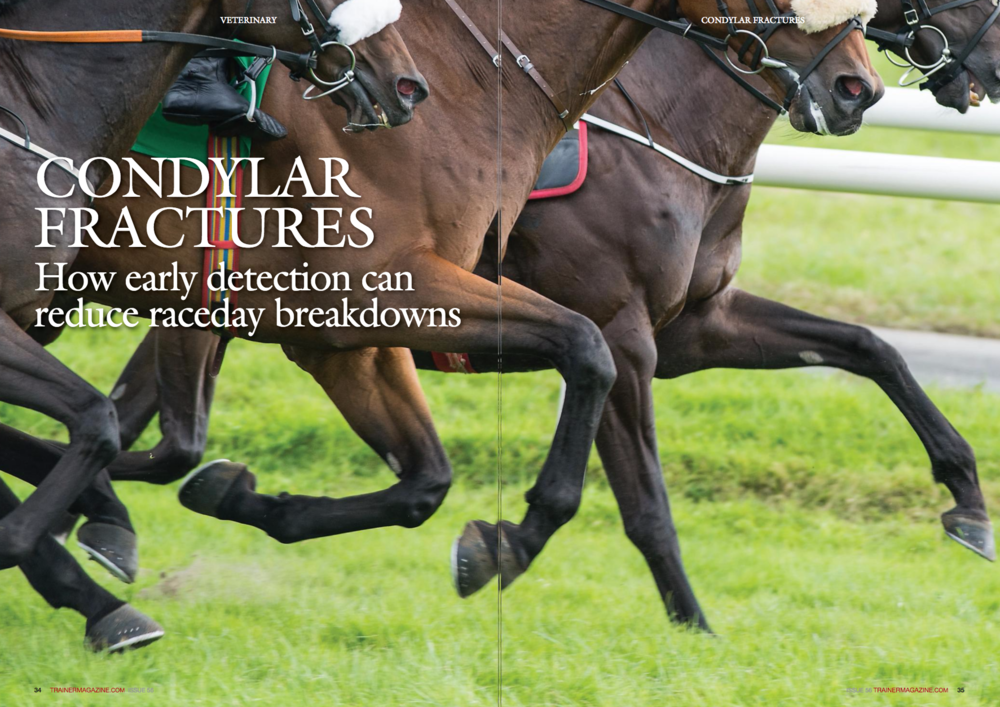 "While the thoroughbred racehorse is the perfect example of athletic form and function, due to the biomechanical forces involved at full gallop musculoskeletal failure has the potential to be life-threatening. Aside from the welfare considerations and the loss suffered by connections, catastrophic injuries at the racetrack are highly public events and can be the yardstick by which many judge our sport and industry. WORDS: PETE RAMZAN BVSc(SyDNEy), MRcVS PHOTOS: SHUTTERSTOcK, PROFESSOR cELIA MARR N laboratories around the world much research effort is being directed at finding the causes of bone failure in racehorses, and the imperative to reduce injury rates has driven the USA's recent exploration of artificial surfaces. Despite this, scientific solutions – whether in the form of lowinjury training programmes, low-risk track surfaces, or easily applicable screening tests – remain over the horizon. However, the key to reducing injury rates could actually be in our grasp already, and could simply involve the application of some 'front-line' veterinary common sense. The most common cause of raceday fatalities worldwide is fetlock breakdown, with condylar fracture (involving the lower end of the cannon bone at the level of the fetlock) being the most important injury at this site. Although 'broken' legs arising from condylar fractures are acute events occurring at high speed, we know that actually in most cases they are the end result of a process that develops over the preceding weeks and sometimes months. Condylar fractures typically start as small fissures at the lower end of the cannon bone, and if trained on undetected these short cracks will ultimately propagate to true fracture when the leg is subjected to the huge loads associated with galloping. While this has been common knowledge in the veterinary world for some time, very little hard data that might assist vets with early diagnosis and better management have actually been collated on the clinical features associated with these condylar fissures. In order to address this need, we gathered together all case details of condylar 'fissure' fractures occurring in Newmarket racehorses under the care of Rossdales racing vets over the course of eight years. Forty-five cases were identified, and results of the study have been published this year in the Equine Veterinary Journal. Greater awareness by racing vets of these early condylar fractures will lead to many of these horses getting screened out in future, before injuries have the opportunity to progress to complete fracture. Several key findings of importance to both racing vets and trainers were documented in the study. Lameness is low grade and limbs are clean The first of these was that at the time of diagnosis condylar 'fissure' fractures are usually associated with only milder grades of lameness. The typical presentation is of a horse in full work displaying a low-grade lameness on one limb, slowly getting worse over the course of a few days or weeks. Sometimes the lameness might initially only be evident under tack, with the horse trotting up satisfactorily in hand. This kind of lameness is quite distinct from that seen with the other important fetlock condition encountered regularly in racehorses, palmar/plantar osteochondral disease (also variously termed 'POD,' 'bone bruising,' or 'condylar concussion'). POD tends to be associated with horses that are 'scratchy' on more than one leg, and as a general rule these horses can safely carry on training indefinitely. Another important finding of the Rossdales study was that fetlock joints affected by these early condylar 'fissure' fractures are normal on palpation. Contrary to popular belief, the most 'dangerous' fetlock joints in the racehorse (those in which a developing condylar fracture is quietly edging closer to serious injury) are not those that carry heat or are swollen or sore-to-flex; the 'fissure' fetlocks are almost invariably cold and tight, with nothing to give away clinically (other than lameness) that an injury is present. 'Angry' fetlock joints are more typically associated with pathologies such as chip fractures or soft tissue injuries, which can present their own problems but generally speaking do not progress to serious/lifethreatening injury. This lack of clear clinical pointers in condylar 'fissure' horses usually means that nerve blocking may be required to localise the lameness to the fetlock region. Obtaining the right radiographic projection is critical When presented with a lame horse that has clean-handling limbs, the veterinarian must utilise some form of diagnostic imaging to determine whether a condylar fissure is present. The first port of call is usually an x-ray machine, and the Rossdales study showed that just over three-quarters of condylar fissures can be detected using conventional radiography. However the crucial point here is that there is only one specific radiological projection that serves to visualise the part of the cannon bone in which these injuries occur: the 'flexed' dorsopalmar (DP), or 'flexed' plantarodorsal for hind fetlocks, view. None of the other 'standard' projections of the fetlock joint are of any use in the diagnosis of condylar fissures. In addition, it is of considerable importance that good quality positioning and exposure factors are used, because the bone changes associated with condylar fissures seen on an x-ray can be very subtle; it is often the case that several radiographs at slightly varying angles need to be taken to confirm the presence of an injury. While this 'flexed DP' projection is easy to do and has been in use for decades now, it has only been relatively recently (since the Hong Kong Jockey Club included it in their obligatory pre-import radiography schedule in 2013) that many veterinary practices have started to use it routinely. It can easily be argued that the 'flexed DP' ISSUE 56 TRAINERMAGAZINE.COM 37 projection is the single most important radiographic view that can be taken in a racehorse, and it is long overdue that racing vets become competent in both its acquisition and interpretation. MRI is the gold standard While radiography picks up most condylar fissures, some of these injuries are very subtle or even 'silent' on x-ray (at least initially), and in a proportion of cases MRI is the logical next step to prove or disprove the presence of a developing fracture. Standing low-field MRI is geographically and economically within reach of many trainers now (in Newmarket the cost of MRI is around £600), and with expert interpretation of images it is widely recognised as the gold standard for fetlock fracture risk assessment in racehorses. Does scintigraphy have a role? While bone scan is invaluable for wholebody screening for other stress injuries Example of importance of obtaining several 'flexed DP' projections; fissure in this case not visible on (a), but appears in (b), taken at slightly different angle. This horse was subsequently confirmed with MRI as having marked pathology at the site and was high risk for serious injury (such as those occurring in the tibia or pelvis), it lacks the technical resolution to differentiate condylar fissure fractures from other, less serious conditions such as palmar osteochondral disease ('bone bruising'). For example, a horse with a condylar fissure can have a relatively normal fetlock on bone scan, while a horse with 'bone bruising' can have an intense 'hot-spot.' For this reason, a lameness already isolated to the fetlock region is best investigated with radiography and/or MRI, rather than bone scan. Outcome in the Rossdales study The Rossdales study provided useful information on outcome and rehabilitation of condylar fissure fractures. A very high proportion (93%) of injured horses that were not retired for other reasons successfully returned to the racetrack. Rehabilitation usually involves simply removing the horse from ridden exercise (typically for 4-8 weeks, depending on individual progress); because the injury has been caught at an early stage there is no need for supportive bandages or lengthy box rest. However, the study also documented that a proportion of cases (17%) suffered re-injury of the same site at some point (sometimes many months) after returning to full work. Early indications are that this re-injury risk is mitigated by the surgical placement of a single screw in the lower cannon. The mechanism for the success of this intervention remains a source of debate among vets because it is generally not technically possible or desirable to have the screw very close to the fracture site (due to its proximity to the joint surface), ""While radiography picks up most condylar fissures, some of these injuries are very subtle or even 'silent' on x-ray (at least initially) and in a proportion of cases MRI is the logical next step "" Examples of condylar fissures; radiographic evidence can range from subtle (a) through to clear 'fracture'-type linear defects (d, e) a) they remain undetected: two horses with fissures that had been undetected on initial radiographs continued in training, aided by joint medication; both subsequently sustained catastrophic condylar fractures and were euthanased. Current thinking is that these condylar fissures will inevitably progress to full fracture if the horse continues in full work, although predicting how many gallops or races away this might be in any individual is not possible. What practical steps can trainers and vets take to prevent condylar fractures? The most important lesson for trainers in this study is that they should recognise that there is a window of opportunity when early cracks can be detected before the cannon actually breaks. Detection relies on being alert to the warning signs of impending condylar injury, and these signs are often quite subtle. Clearly, the use of non-targeted joint injections or training on systemic anti-inflammatories (such as bute) will mask low-grade lameness, and thereby hamper opportunities to pick these horses out of the string. Intra-articular medication is an essential component of good racehorse sports medicine but if used without due caution it simply allows horses with condylar injuries to be trained closer to catastrophe. Regardless of any great leaps forward in the science of fracture prevention that might emerge in coming years, it is a fair bet that racetrack breakdown rates will not diminish substantially until attitudes to anti-inflammatory use change. Does early intervention mean bigger vet bills? Absolutely not. None of the imaging needed to detect early cracks is expensive or particularly technical, and a veterinary culture of observing and getting to know individual horses well is often much more economical than one of indiscriminate use of medication (or indeed imaging). Early condylar injuries generally only propagate to full fracture at fast speed, so there is often some leeway for the trainer to continue to monitor a new lameness over a period of time to determine whether the lameness is persisting or getting worse. This is much preferable to administering antiinflammatories and carrying on blindly. Does every lame horse need to be radiographed? Not at all, but when under pressure from an approaching race target or if time constraints preclude a 'wait and see' approach, the priority should always be to rule the fetlock out through imaging or blocking to give a measure of comfort that the horse is not nursing a potentially serious injury. Too many high-profile breakdowns in the past have occurred in horses with a lameness (frequently attributed to a 'bruised foot') leading into the race; there is really no excuse for this in these days of mobile digital radiography, where obtaining good quality x-rays of a fetlock without sedation is commonplace. So here we have it: the most important racehorse fracture worldwide can in many cases be detected before serious injury occurs, simply by using tools already at our disposal and with greater vigilance and smarter interventions by the trainervet team. Of course, there will always be some condylar fractures that do not give any warning and likewise we have not yet found the key to preventing serious fetlock fractures associated with pastern or sesamoid injuries. But we now know enough about condylar injuries to say that there should be greater critique of statements in the press in the wake of serious condylar breakdowns that refer to horses 'taking a bad step' or suffering a 'terrible accident': terrible, yes, but in many cases accident, no. While it is possible that we may never be in a position to actually prevent these early cracks from developing in the first instance, it is certainly within our power to stop many condylar fissures from progressing to serious condylar breakdowns on the racetrack. n b) c) d) e) h however it does appear to work; none of the seven horses that underwent surgery subsequently sustained a re-injury. The Rossdales data also highlighted the danger that these condylar fissures pose if"