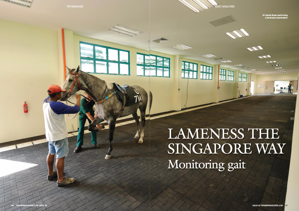 "Although one of the most common issues affecting racehorses, lameness is also one of the hardest to quantify. A two-year study in Singapore aims to find out whether regular measurement of a horse's gait can be used to predict musculoskeletal injury. WORDS: MaRia FeRnanDa SepulveDa CavieDeS pHOTOS: MaRia FeRnanDa SepulveDa CavieDeS, SHuTTeRSTOCK ECAUSE I was born under a lucky star, I was offered the sensational opportunity to conduct a two-year long study in the beautiful, hyperefficient, and very hot island of Singapore. The study 'Early detection of musculoskeletal injury in the Thoroughbred through monitoring of movement symmetry' started in November 2014 and is funded by the Horserace Betting Levy Board (HBLB), and it was designed by Dr Thilo Pfau together with Professors Renate Weller and Kristien Verheyen from the Royal Veterinary College in London. Traditional veterinary evaluation of lameness is subjective. Objective tools to document and measure specific forms of lameness and changes in gait are needed and will allow horses to be evaluated more consistently over time, looking for patterns of lameness developing during training. It may also be possible to predict specific sites of injury or pain based on the patterns observed with gait analysis. The idea behind this HBLB project was simple: follow as many thoroughbreds in training as possible on a monthly basis for a year and a half, tracking their soundness with a sensor-based gait assessment device at the Singapore Turf Club (STC), then correlate their medical history and their soundness/lameness in an attempt to determine which of the many gait parameters that are measured by the gait analysis system could be used to detect musculoskeletal injuries, ideally before they become clinically apparent. The venue The Singapore Turf Club is a modern racetrack with an all-weather surface and a turf track. The horses that regularly race there are stabled around it by the different trainers in similar stable blocks and are treated by the same vets at the STC veterinary clinic. Horses coming in and leaving the STC undergo stringent quarantine and veterinary checkups. Most HBLB-funded research is conducted in the UK, but for this study Singapore was chosen because it was an environment with convenient logistics allowing to test a large number of horses in training, while at the same time reducing as much as possible the variables that may influence soundness and performance (i.e. track surface, veterinary treatments, weather, etc). Very importantly, the setup allows the testing to be carried out in a real life situation and not in a lab. The gait analysis device Everybody who deals with horses knows that lameness is one of the main problems that affects racehorses, shortening their racing careers and causing the industry to lose a lot of money. Some lamenesses may be tricky to pinpoint and even the most experienced vet could have trouble localising lameness. As an answer to this, a couple of systems that detect very slight/ intermittent lameness have been developed and validated, and these can help vets use a more objective approach to detection and grading of lameness. The machine used in the project uses inertial sensors, containing miniaturised accelerometers, gyroscopes, and magnetometers and aided by a GPS device. These sensors can track movement in three dimensions and calculate the speed of the horse. These are readily utilised in the missile and drone industry … so we are talking about technology that is state-of-the-art. The system is capable of detecting differences in gait symmetry (i.e. between the stance Although one of the most common issues affecting racehorses, lameness is also one of the hardest to quantify. A two-year study in Singapore aims to find out whether regular measurement of a horse's gait can be used to predict musculoskeletal injury. WORDS: MaRia FeRnanDa SepulveDa CavieDeS pHOTOS: MaRia FeRnanDa SepulveDa CavieDeS, SHuTTeRSTOCK The Singapore Turf Club ""A couple of systems that detect very slight/ intermittent lameness have been developed and validated that can help vets to detect gait abnormalities phases of right fore and left forelimb) in the order of millimetres, and is more sensitive than the human eye in picking up these small asymmetries (Figure 2). The sensors are the size of a matchstick box (Figure 3) and are stuck to the horse simply using double-sided tape, or they can be placed in a Velcro pouch and attached to the tack, usually the surcingle and the headband on the bridle. For this study, the sensors were placed: one on the poll, one on the withers, another on the sacrum (tuber sacrale, or midline on the highest point of the croup), and one on each point of the hip (left and right tuber coxae) (Figure 4). The sensors were wired to a transmitter on a surcingle, which could then send all the data directly and instantaneously to a laptop via Bluetooth (Figure 5). The practically feasible range between horse and computer is around 50m, so it is easy to record standing at one end of a trot-up while the horse handler (or ""syce"" as they are called in Singapore) trots a horse in hand. The trainers, vets and horses Sixteen trainers were recruited into the study on a voluntary basis and graciously allowed some or all of their horses to undergo gait analysis once a month. The vets of the STC veterinary clinic were closely involved in the project, especially Dr Bronte Forbes, who helped coordinate many of the aspects of the data collection and treatments of the participating horses. The veterinary clinic is supervised by Dr Koos van der Berg and has state-of-theart medical diagnostic equipment, and its vets are highly trained and extremely experienced. The horses included in the study ranged in age and experience. Some were sound throughout while others became lame during the study, but all were in Flat race training at recruitment. The Singapore Gait Analysis Study At the beginning of this project, it was necessary to establish the repeatability of the gait measurement. Once we were sure that horses could be followed with the a) Lame horse on the left fore. There isn't symmetrical weight bearing or both fore feet. The difference is of a few millimetres Figure 2: Output graph that shows a) a sound horsea; and b) a horse with a slight asymmetry in gait on the left fore. The dark blue line is the average for each stride, and the grey area is the time that the foot is in contact with the floor, bearing weight. The scale on the left is in metres Figure 3: The gait analysis sensors are the size of a matchstick box. Figure 2 Figure 3 Figure 5 Figure 4: Sensors are attached at the poll, withers, croup and hips F necessary repeatability, the study was fully "" underway. Monthly data collection sessions were arranged. Trainers were contacted a week before and coordinated my visit with them. In the sweltering heat, the horses and their syces would be waiting for me in the shade. Then over an hour or two, the manic sequence of placing the machine on the horse, trotting it, taking the machine off, and checking the data kept going without stopping. Parallel to this, medical data for each horse was compiled. Data collection is now complete and the research team are currently correlating the gait measurements to the diagnosed lamenesses. In addition to the main study, the set up in Singapore allowed us to conduct a number of sub-projects. We have compared the gait parameters generated for sound and lame horses over different surfaces. Data analysis is still under way and will ultimately help determine which surfaces aggravate or reduce a lameness. This could be helpful for vets to prescribe exercise on different surfaces during the rehabilitation process and also to choose the surface best suited for accentuating mild asymmetries in order to detect them during gait analysis (Figure 6 and Figure 7). We also compared the output of the machine with the subjective visual lameness grading by the experienced racing vets. Once data analysis is finished, the aim is to relate the gait parameters recorded by the machine to the grades of the most commonly used lameness grading systems in thoroughbreds. This will help making the gait analysis results more readily interpretable by racing vets. Future goals The final analysis of the data generated during those 18 months is ongoing. However, this project has demonstrated that it is feasible to perform regular gait analysis sessions in a training yard environment. This study is the first step towards future work evaluating links between specific objective changes in gait symmetry and injury to be able to prevent serious injuries in thoroughbreds in training or while racing. n Figure 7: Dr Bronte Forbes trotting a horse over different track surfaces"