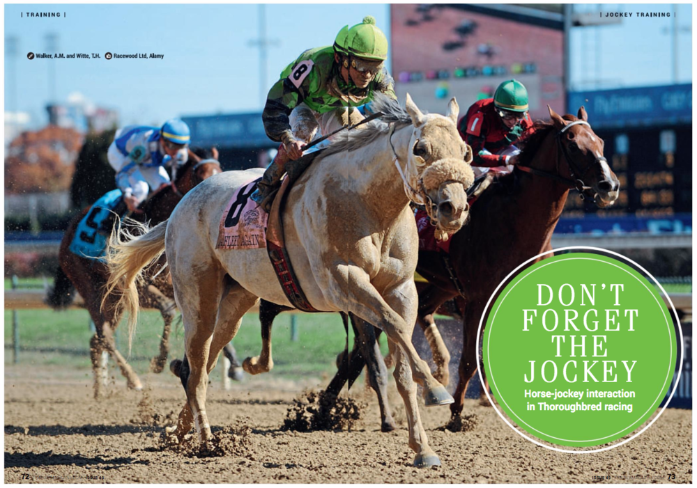 Don't forget the jockey: Horse-jockey interaction in Thoroughbred racing. Walker, A.M. and Witte, T.H.   Abstract The interaction between horse and jockey in racing is a fundamental partnership that can be optimized to achieve peak performance. Performance benefits have been demonstrated for major changes in jockey technique such as the change from seated to the modern martini glass posture. However, if the partnership between horse and jockey does not work effectively together in a synchronized and complementary manner then, irrespective of the ability of the horse, performance may be constrained and the risk of injury of both horse and jockey may be increased.   Jockey training techniques have developed rapidly in recent years to involve sport-specific fitness training and technique optimisation, often using mechanical racehorse simulators. Simulators allow carefully controlled, safe, and cost-effective training environments that can be used for prolonged periods to improve fitness, train neural pathways, and develop muscle memory. Simulator training allows the jockey and coach to focus on specific elements of technique with immediate and detailed feedback, which in some cases can include physical manipulation to improve position and help jockeys to 'feel' the correct posture. Furthermore, additional skills such as correct use of the whip can be practiced in a safe, repeatable, welfare friendly environment.   Our research set out to characterize optimum jockey technique, measure the similarities and differences between simulators and real horses, and to measure changes in ability between jockeys of different experience levels. Using wireless sensor technology we have identified targets for skill optimisation with the potential to form the basis for improved feedback to jockeys during training.   Optimizing Performance Extensive research has been carried out for many years to establish optimal breeding and training of Thoroughbred racehorses to improve performance, reduce race times, and minimize injuries and horse falls. Methods for early prediction of performance extend to genetic, physiological, and microbiological testing, and studies have become so specific that even the effect of girth tension has been investigated. This body of work has led to the refinements of tack, breeding, training, and veterinary care that underpin the sport and wider industry.   One aspect that remains under-investigated is the jockey. It is self-evident that the jockey plays an integral role in race performance and injury prevention, but the mechanics of the horse-jockey interaction have not been quantified. We do know that jockeys are not a passive load, simply being carried by the horse. On the contrary they are high-performance athletes who work hard during a race to isolate their movement from that of the horse and reduce the negative impact of load carrying on locomotion.   Research Recent studies funded by the British Horserace Betting Levy Board and carried out by the Royal Veterinary College in London applied modern sensor technology to measure the biomechanics of the horse-jockey interaction. Advances in technology have allowed movement and force data to be collected in the field for the first time. Data were collected to support and further develop anecdotal and historical theories, which is hoped will facilitate future training.   Improved understanding of the repetitive, cyclical movement of jockeys of varied experience and skill level helps to define optimal technique which can then be used as a model for trainee jockeys. Defining this model will provide opportunities to adapt training and feedback to best practice, as undertaken in other elite sports where such feedback has been shown to speed up the rate of skill development. In jockeys this approach has the potential to reduce the risk of injury and falls, and to improve welfare.   Simulator vs. Horse Our most surprising results were obtained when comparing racehorse movement patterns to the movements of a racehorse simulator commonly used for training jockeys. Movement of the simulator, when viewed from the left side, formed an anticlockwise oval trajectory while movement of a real horse, subtracting the effect of forward movement, moved clockwise. In other words, both moved in a cyclical manner but in opposite directions. The simulator also had a larger range of forwards-backwards motion while the real horse had a larger up and down movement. As may be expected, jockey pelvis movement was consistently measured in a cyclical trajectory opposite in direction to that of the simulator and horse. In both cases, the amount of vertical movement of the jockey's pelvis was found to be less than half that of the horse, supporting previous work showing that the jockey's legs act like a damper. The jockey's legs effectively absorb the movement of the horse resulting in a comparatively stationary, stable position of the trunk, minimizing the impact on the horse of carrying the additional weight of the jockey.   Also striking was the difference in force through the stirrups measured during galloping on a horse compared to a simulator; the forces on the horse were more than double those on the simulator. This difference stems from the fact that the simulator cycles horizontally, rather like a rowing machine, resulting in a relatively consistent weight distribution through the stirrups. In contrast, a horse effectively jumps from stride to stride with an aerial phase resulting in higher force peaks (Figure 1). Interestingly, on a simulator left to right symmetry of stirrup forces were more symmetrical in elite jockeys compared to novices. However on a horse symmetry was not significantly different across experience levels, likely due to the inherent asymmetry from horse trunk roll that is absent in the fixed simulator, where there is very little sideways movement or roll for jockeys to accommodate.   The absence of trunk roll on a simulator eliminates one of the more complex elements of the movement to which a jockey must respond and adapt. The direction and timing of the sideways displacement and roll in horses is linked to gallop lead. The start of the stride coincides with the trunk rolling away from the lead leg before rolling towards the lead leg mid-stride and then away again just before the start of the next stride (Figure 2). This movement appears to have less effect on the stability of experienced jockeys who are more balanced and displace less during a stride cycle and may thereby be able to maintain a solid base of support, an important factor in the risk of falling.      These differences between simulators and horses raise important questions about the effect of training on a simulator. Although important in the development of sport-specific endurance and stamina, simulators may be deficient in precise skill and technique development.   Jockey Experience Epidemiological studies have highlighted jockey experience as a key risk factor for injury and falls. Novice jockeys are at higher risk of falling than their more experienced counterparts; however specific differences in technique have not been measured. As with most practical skills, technique changes as jockeys become more experienced. Experienced riders are more stable and balanced than novices. We have measured this as a smaller range of movement and more consistent movement after subtracting the effect of the horse or simulator. More even weight distribution is seen between the left and right stirrups during simulator training, although the importance of this is difficult to judge in light of the inherent asymmetry of horse motion at a gallop.   Whip use While the effect of using a whip on jockey position and riding technique requires further detailed analysis, our initial results indicate that with experience jockeys are more able to apply the whip at a specific target time within a stride cycle. Sensor measurements suggest that jockeys move more from side to side during a cycle in which the whip is applied, which combined with twisting of the upper body enables correct contact to be made for optimal effect and to avoid penalties.   Impact on Racing Defining and understanding what constitutes optimal jockey technique will inform future training and improve safety and welfare of both the horse and rider. By further understanding the differences between a real horse and a horse simulator, training of both novice and experienced jockeys can be optimized and simulators used for maximum benefit in training and rehabilitation. Any counterproductive exercises can be eliminated or adapted as appropriate.   Next Steps Further investigation is required into non-steady state events such as whip use, jumping, riding out of starting stalls, and riding a finish. Real-time feedback systems should soon be available to aid the development of specific skills, providing opportunities for the objective monitoring of training, development, and performance. In preliminary testing we have found that such feedback is most effective when jockeys have already established the basic neuromuscular fitness and control required for the repetitive cyclical movement exhibited by both racehorse simulators and real horses.   Conclusions Multiple factors influence the complex interaction between horse and jockey. Differences between a simulated and real horse gallop may limit the suitability of simulator training for skill development, but the benefits to cardiovascular and musculoskeletal conditioning and training cannot be contested. Non-steady state locomotion such as riding a finish or whip use significantly alters jockey movement and technique affecting their interaction with the horse, and these areas warrant further detailed investigation to ensure that any future changes to racing regulations remain evidence based.     Figure 1a     Figure 1b     Figure 1: Stirrup force profile during a) gallop on a real horse and b) simulated gallop from an experienced jockey. Red and blue are right and left stirrup forces respectively. The black dashed box indicates one stride cycle.   Figure 2   Figure 2: Horse pelvis roll during right lead (red) and left lead (blue) gallop. A positive roll indicates a roll to the right with negative a roll to the left. Each line represents an individual stride.
