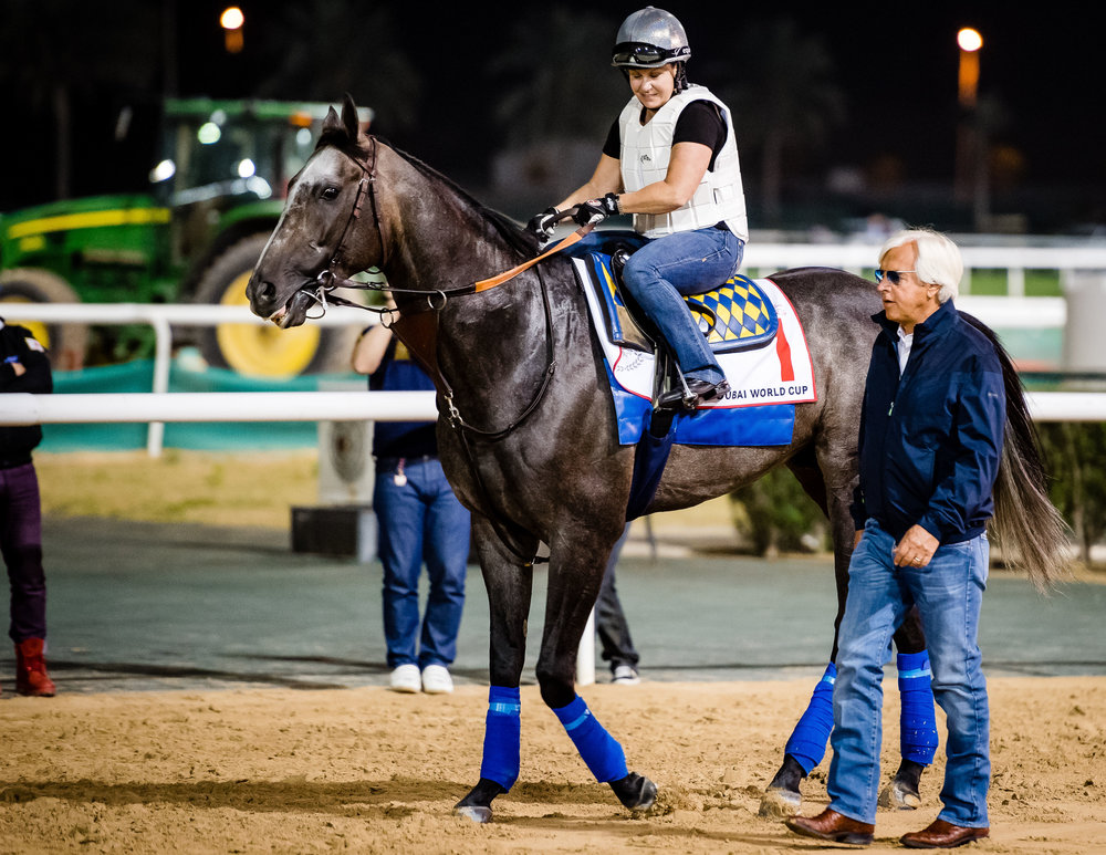 DUBAI, UAE - MARCH 24: Bob Baffert with Arrogate on the track at Meydan Race Track in preparation for the Dubai World Cup Race on March 24, 2017 in Dubai, UAE. (Photo by Douglas DeFelice/Eclipse Sportswire/Getty Images)