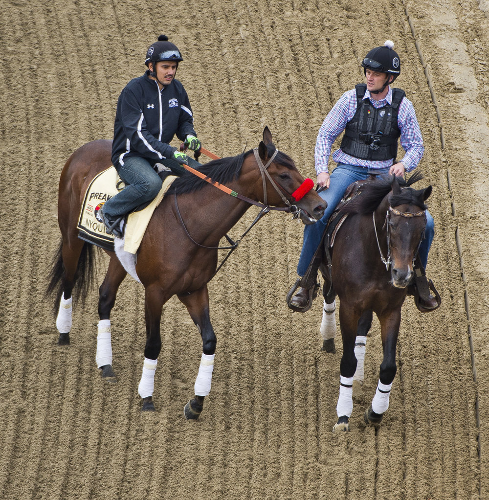 BALTIMORE, MD - MAY 19: Nyquist, with Jonny Garcia riding, is ponied around the track by Assistant Trainer Jack Sisterson as horses prepare for the Preakness Stakes at Pimlico Race Course on May 19, 2016 in Baltimore, Maryland. (Photo by Scott Serio/Eclipse Sportswire/Getty Images)