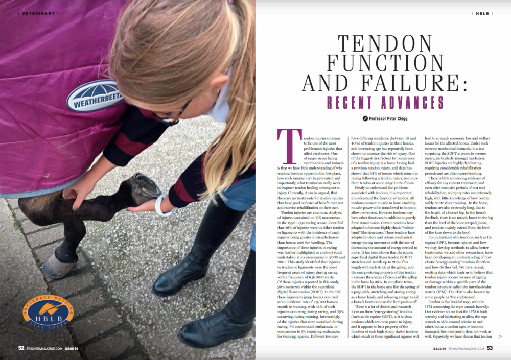 """Tendon injuries continue to be one of the most problematic injuries that affect racehorses. One of major issues facing veterinarians and trainers is that we have little understanding of why tendons become injured in the first place, how such the SDFT in the horse acts like the spring of a pogo stick, stretching and storing energy as a horse lands, and releasing energy to aid a horse's locomotion as the limb pushes off.       There is a lot of clinical and research focus on these """"energy-storing"""" tendons (such as the equine SDFT), as it is these tendons which are most prone to injury, and it appears to be a property of the function of such high strain, elastic tendons which result in these significant injuries will lead to so much economic loss and welfare issues for the affected horses. Under such extreme mechanical demands, it is not surprising the SDFT is prone to overuse injury, particularly amongst racehorses. SDFT injuries are highly debilitating, requiring considerable rehabilitation periods and are often career-limiting.       There is little convincing evidence of efficacy for any current treatment, and even after extensive periods of rest and rehabilitation, re-injury rates are extremely high, with little knowledge of how best to safely reintroduce training. In the horse, tendons are also extremely long, due to the length of a horse's leg. In the horse's forelimb, there is no muscle lower in the leg than the level of the knee (carpal) joints, and tendons mainly extend from the level of the knee down to the hoof.      To understand why tendons, such as the equine SDFT, become injured and how we may develop methods to allow better treatments, we and other researchers, have been developing an understanding of how elastic """"energy-storing"""" tendons function and how do they fail. We have recent, exciting data which leads us to believe that tendon injury occurs because of ageing or damage within a specific part of the tendon structure called the interfascicular mat"""