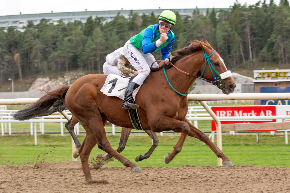 Hurry Lime and Julian McLaren. Photo  Elina Björklund  Svensk Galopp.jpg