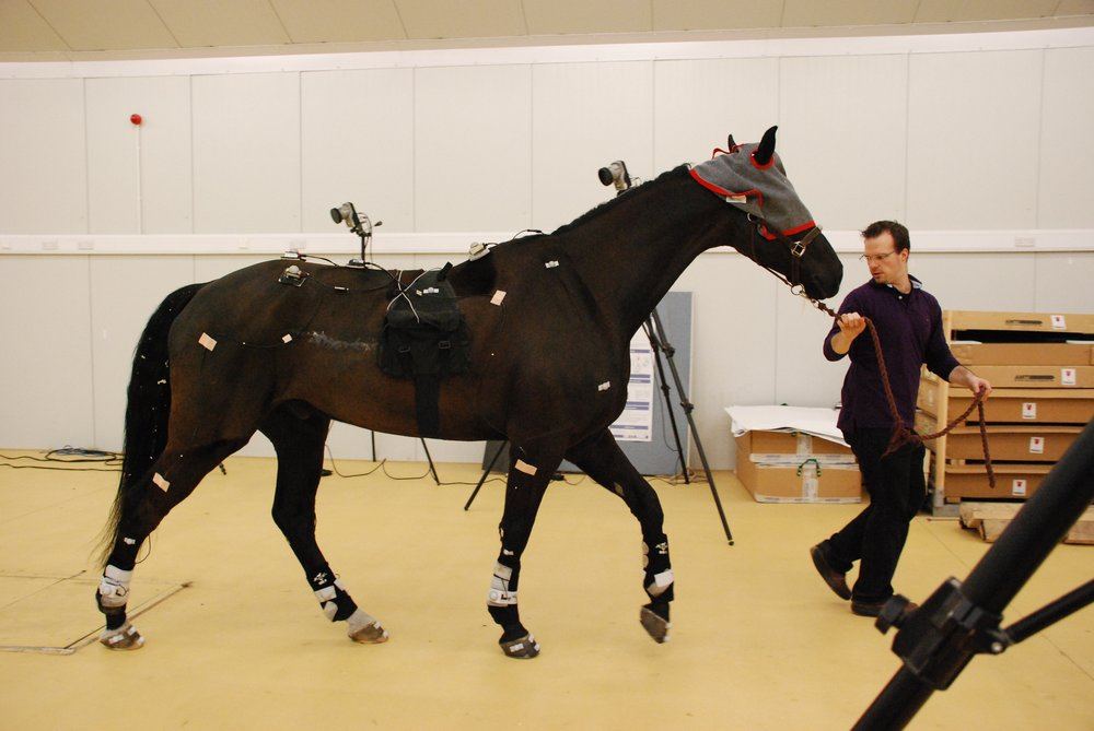 Blindfolding the horse, exacerbates the ataxia and improves the accuracy of objective ataxia assessment.