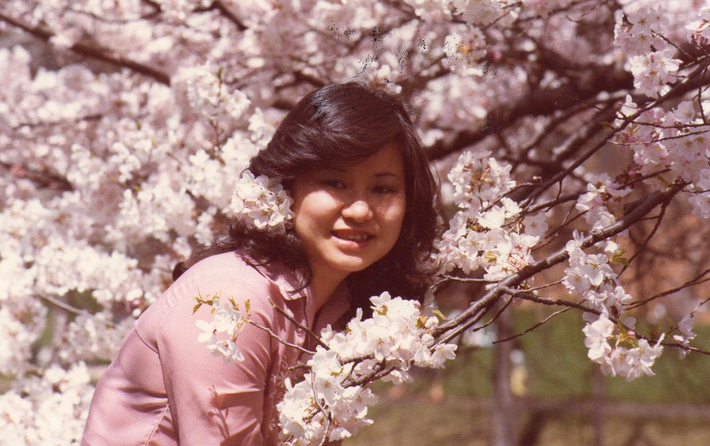 1980, Newark. Branch Book Park, Cherry Blossoms.